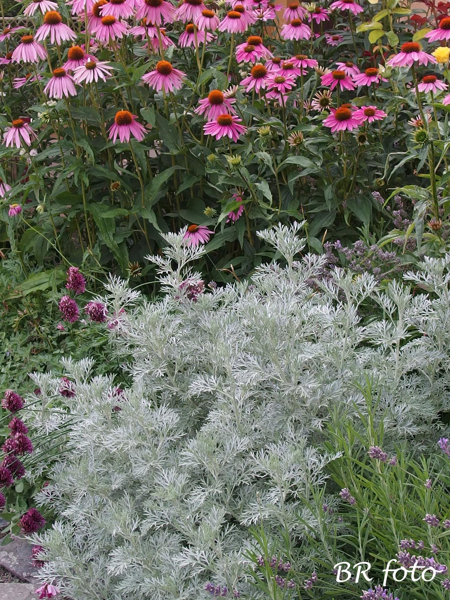 Zahrada v létě - pelyněk