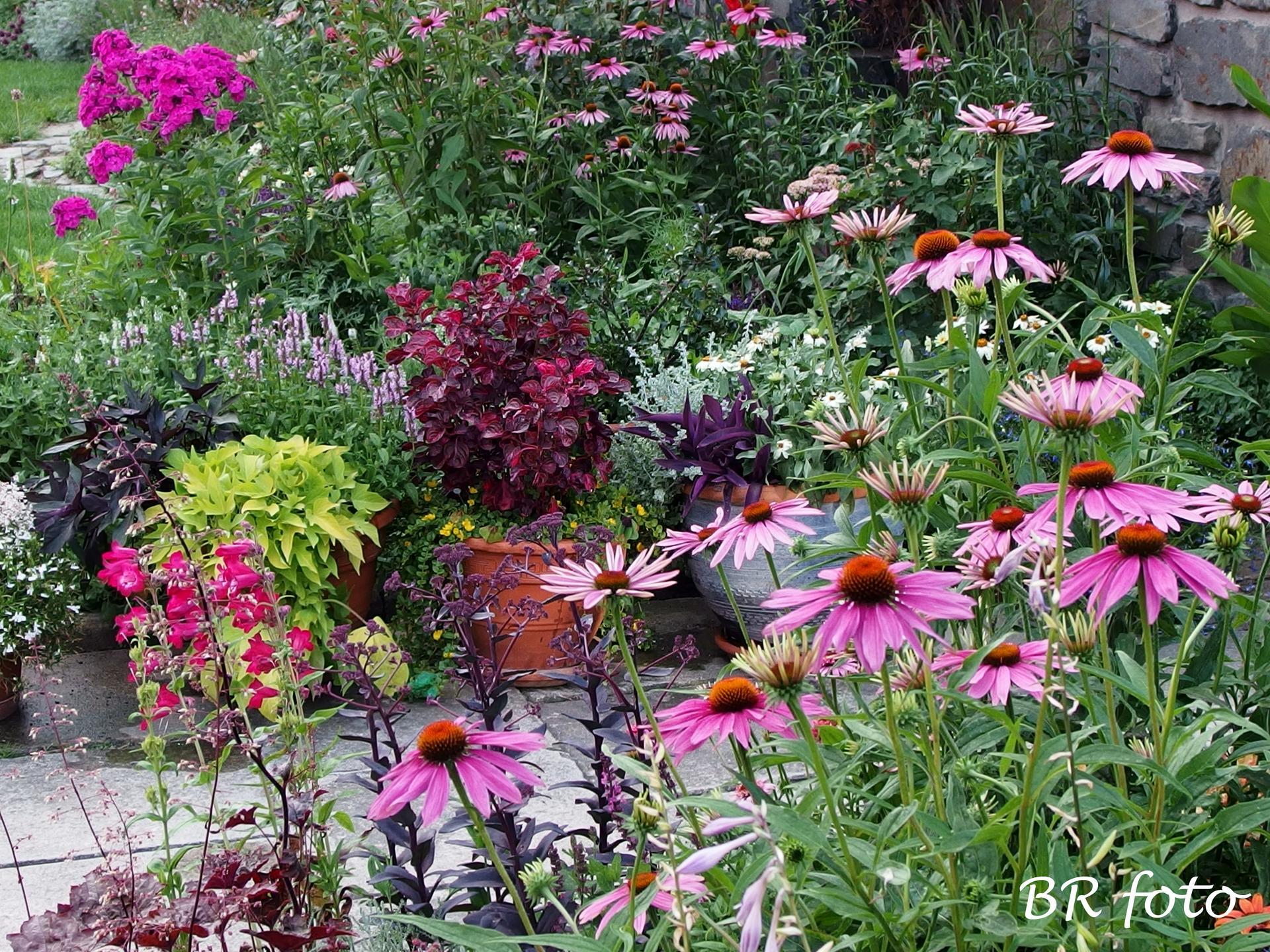 Zahrada v létě - Obrázek č. 56