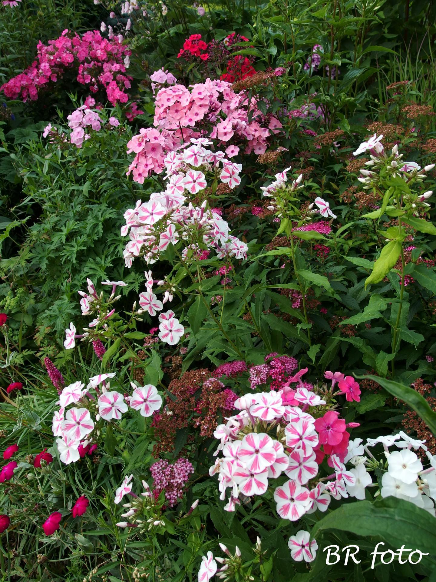 Zahrada v létě - Obrázek č. 59