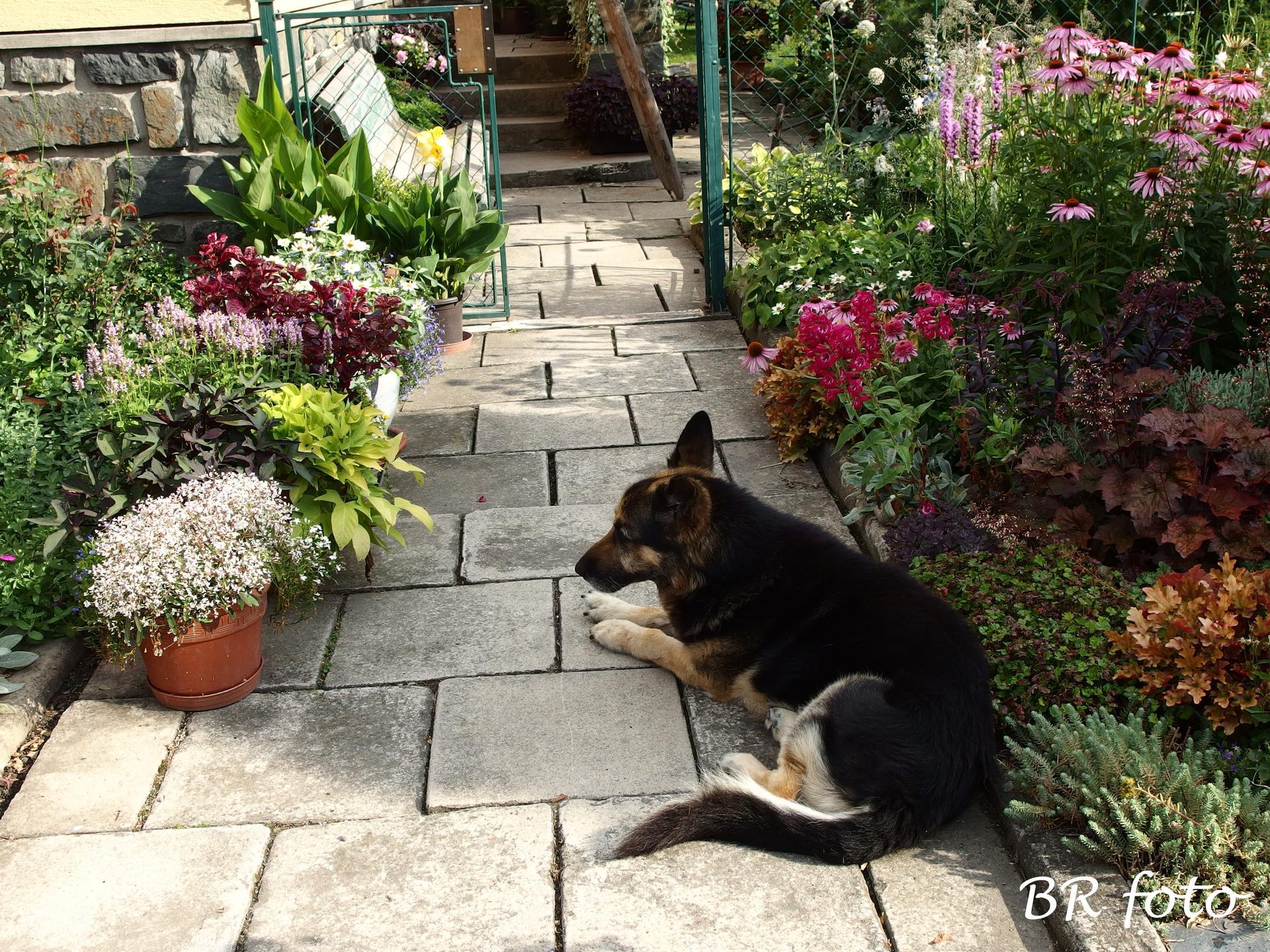 Zahrada v létě - Obrázek č. 53