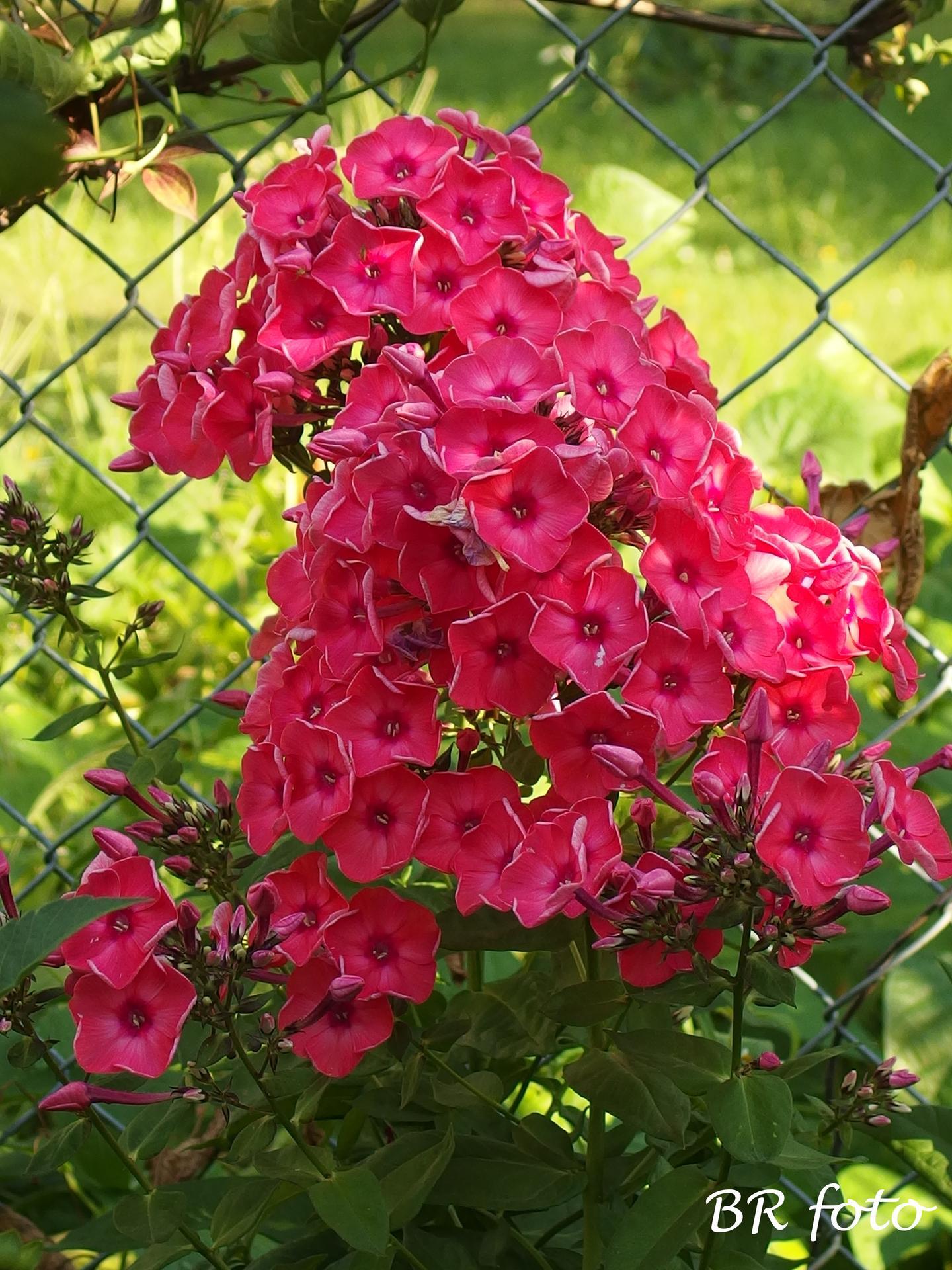 Zahrada v létě - Obrázek č. 66