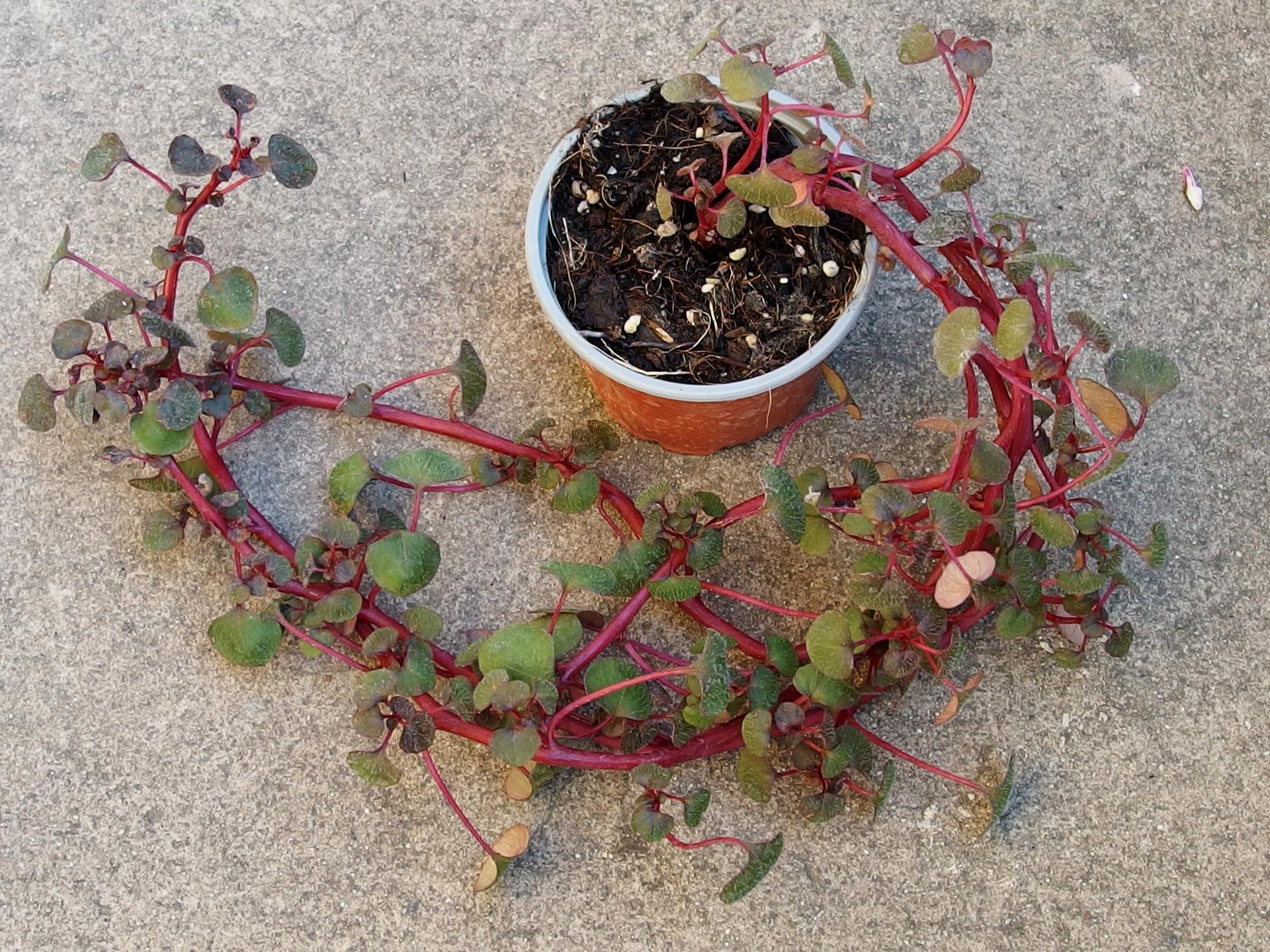 Zahrada v létě - nevím, jak se jmenuje, poraďte....