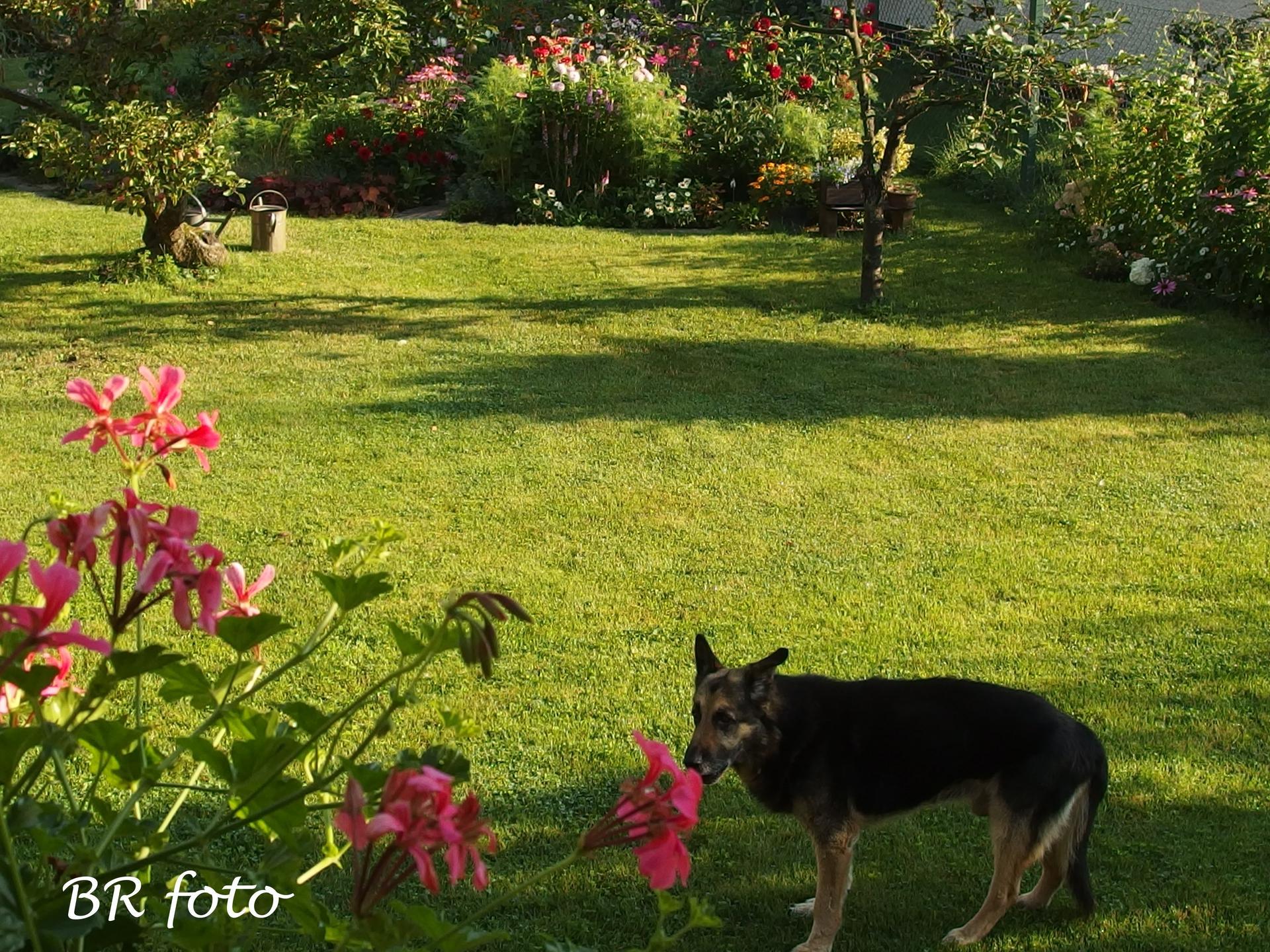 Zahrada v létě - ráno v zahradě