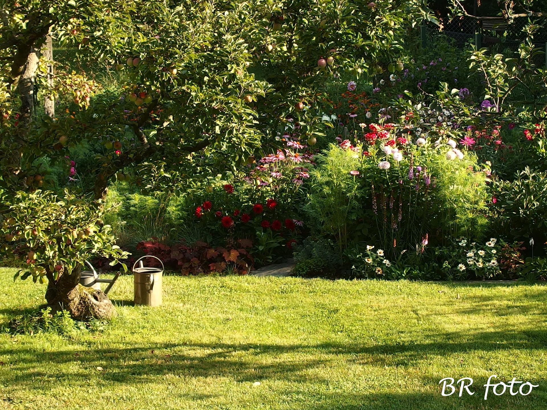 Zahrada v létě - Obrázek č. 64