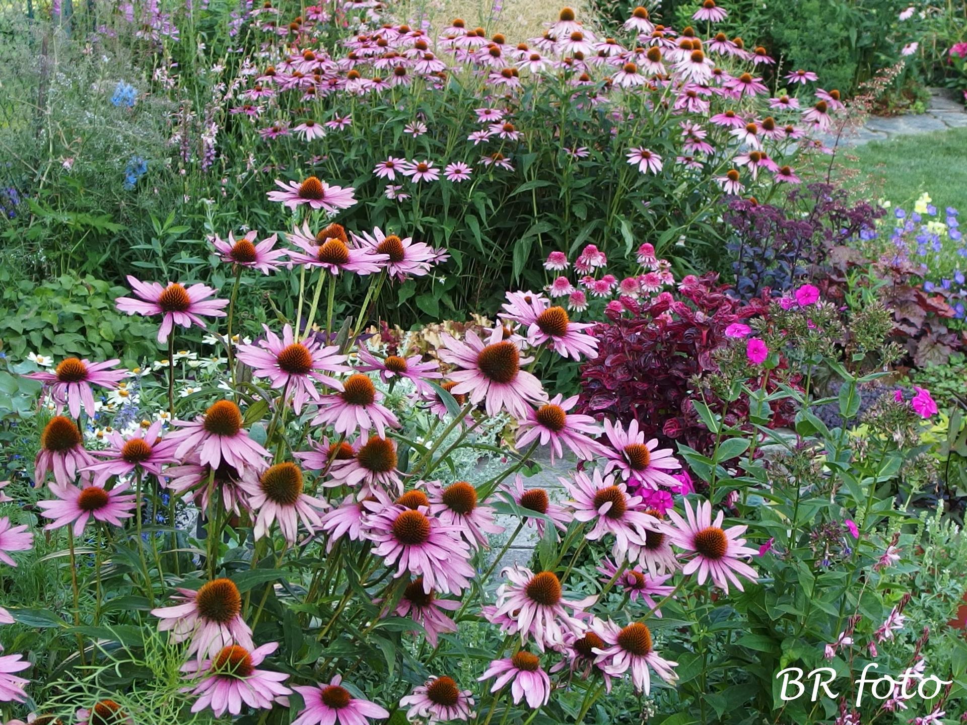 Zahrada v létě - Obrázek č. 77