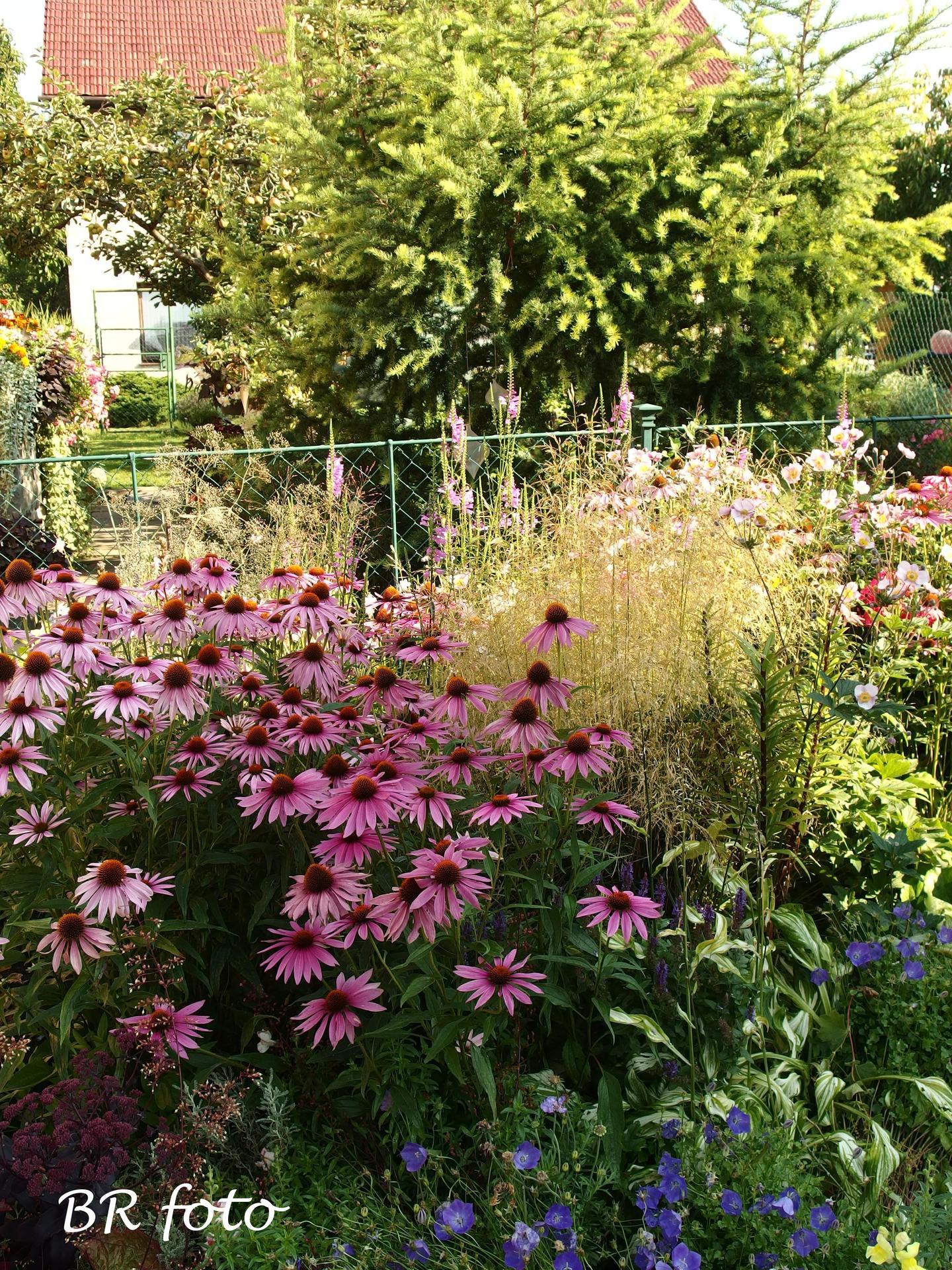 Zahrada v létě - Obrázek č. 76