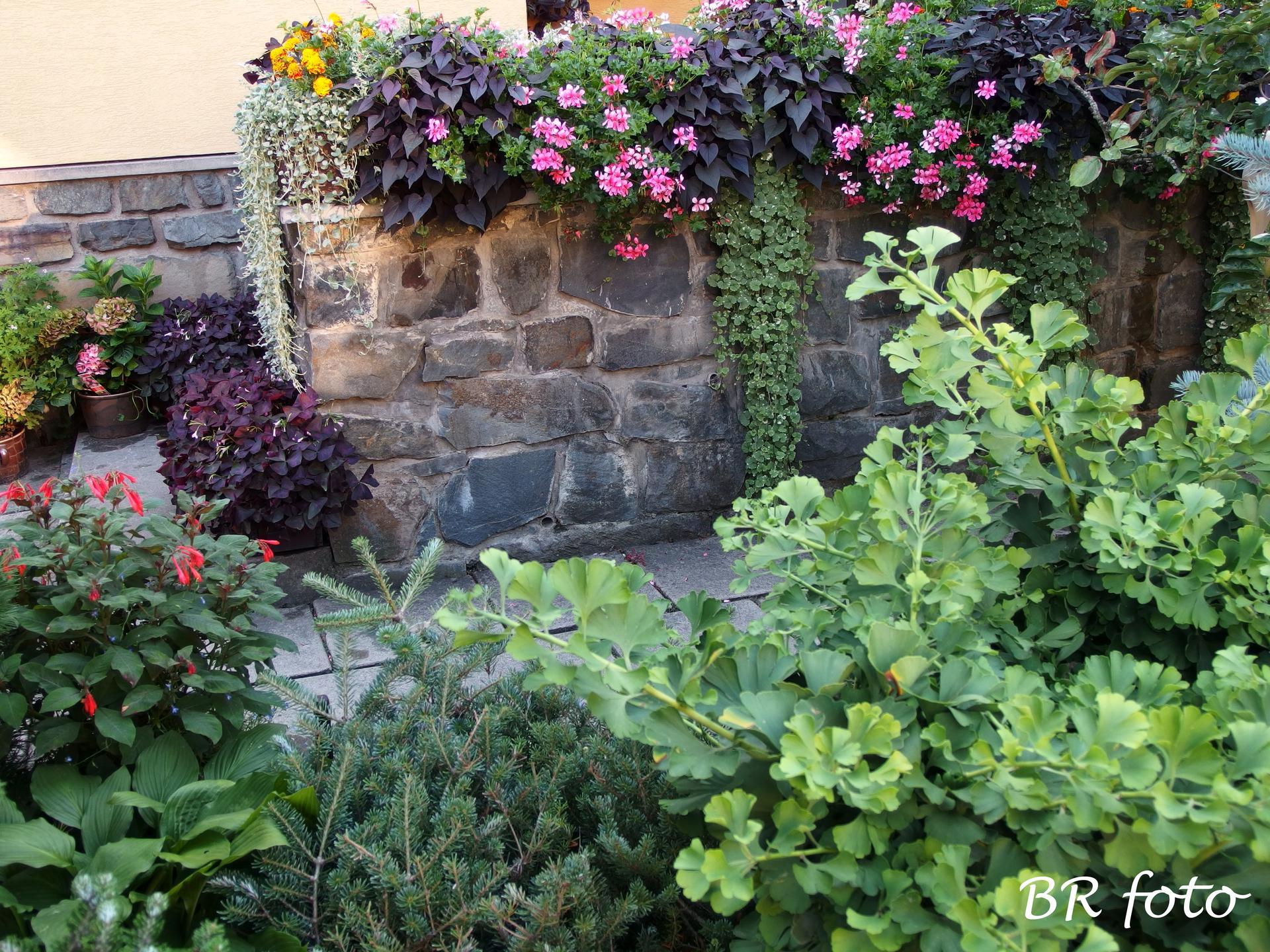 Zahrada v létě - Obrázek č. 81