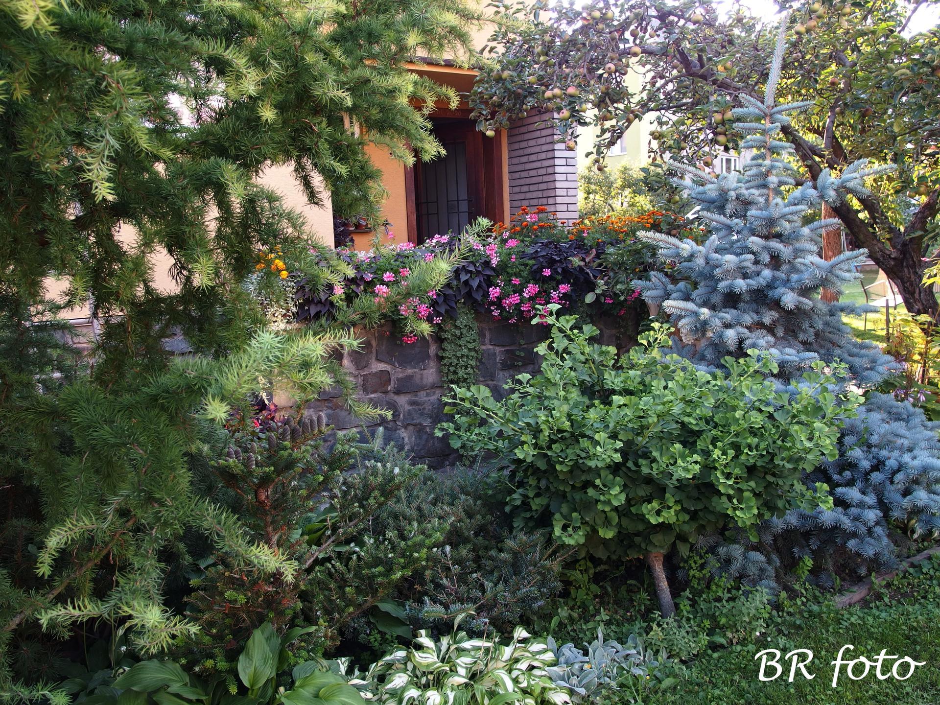Zahrada v létě - Obrázek č. 82