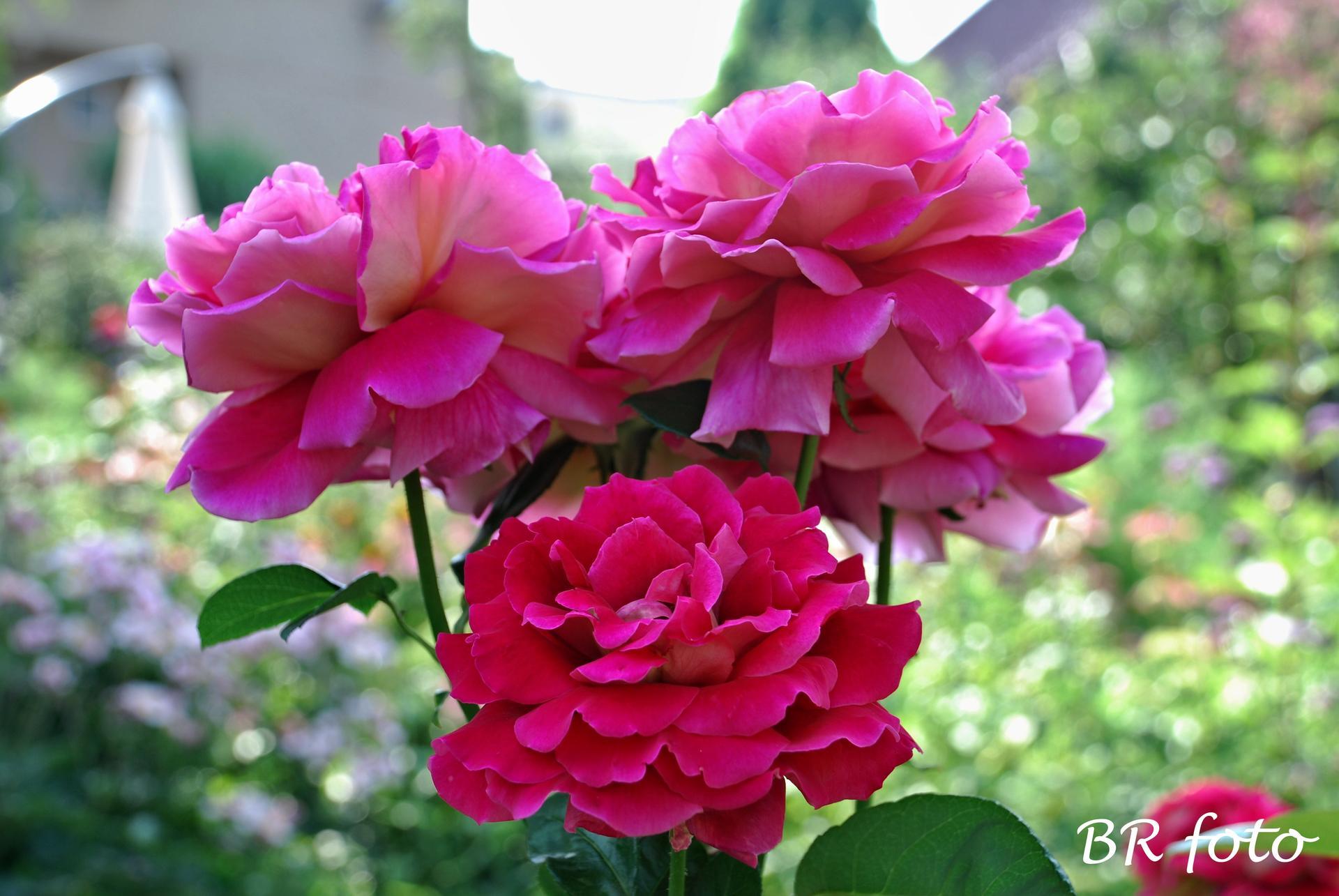 Zahrada v létě - Obrázek č. 84