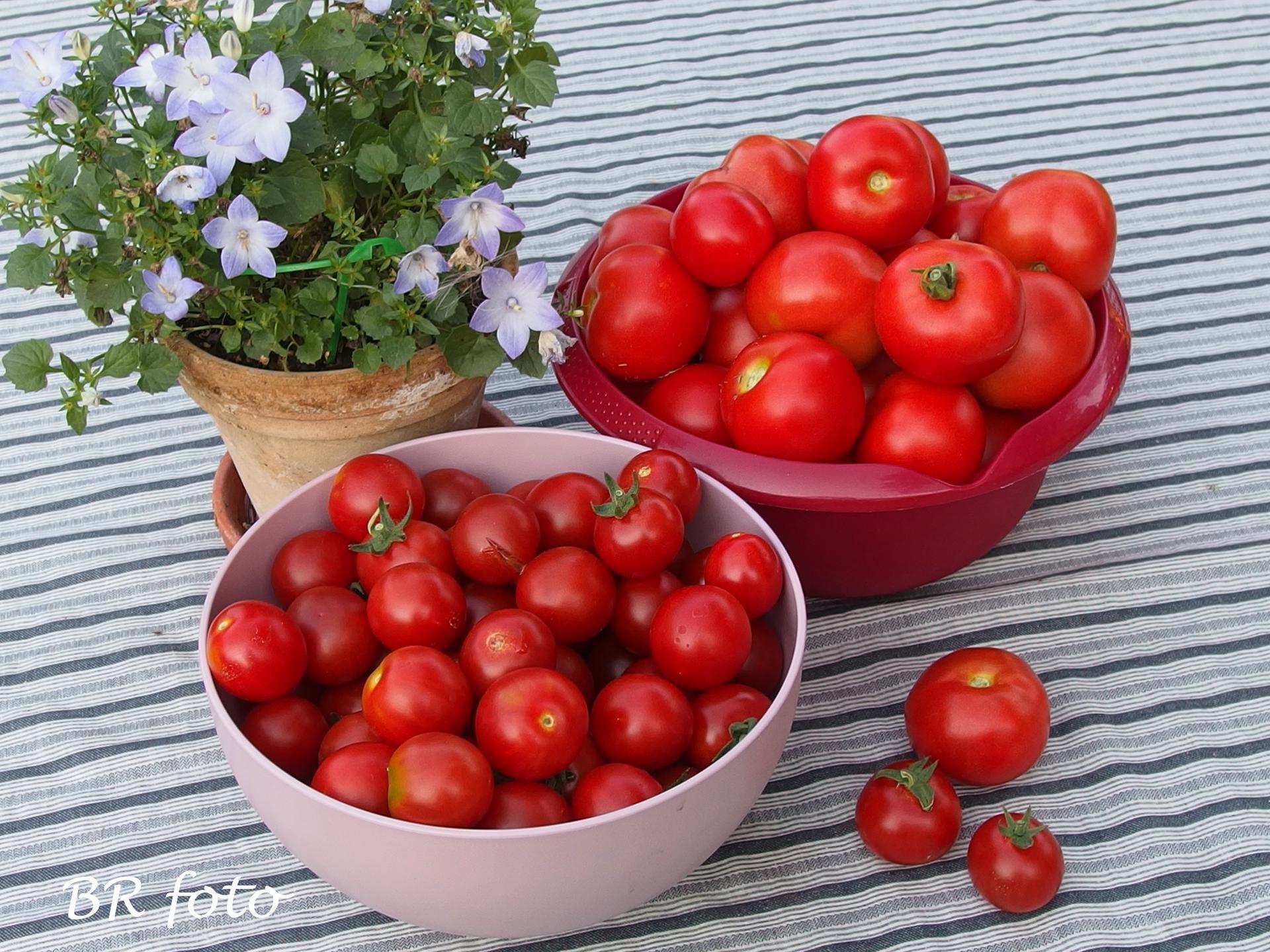Zahrada v létě - Obrázek č. 87