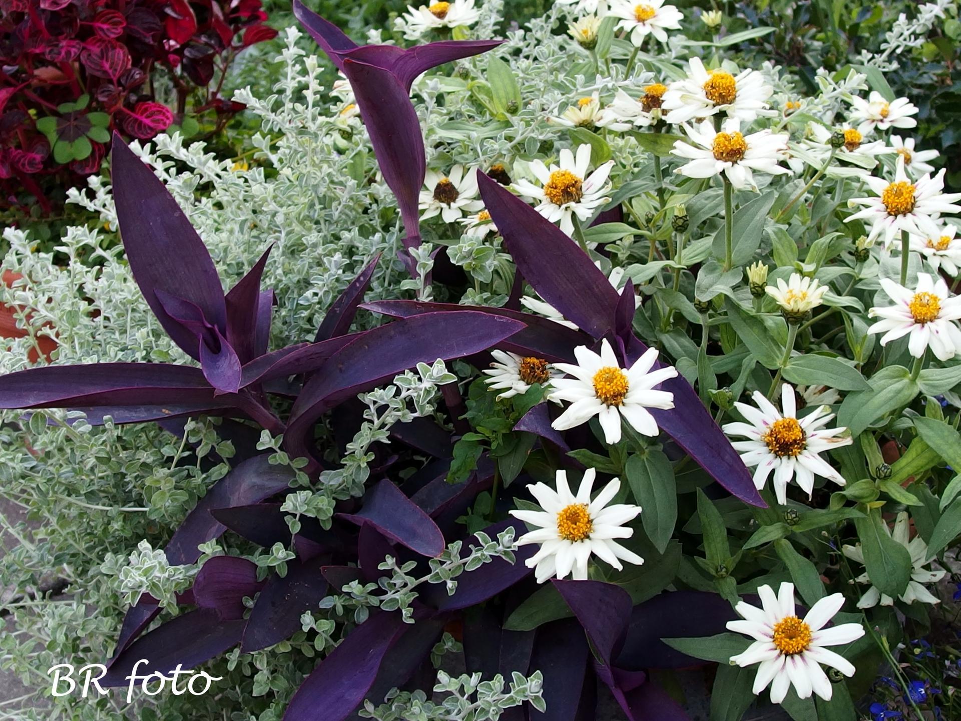 Zahrada v létě - Obrázek č. 94