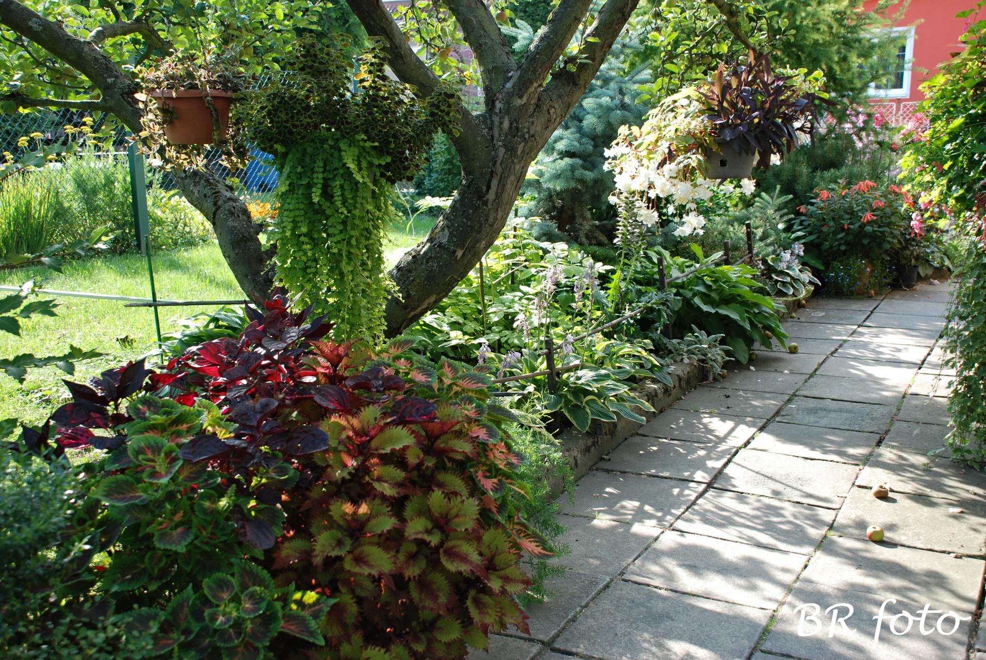 Zahrada v létě - Obrázek č. 91