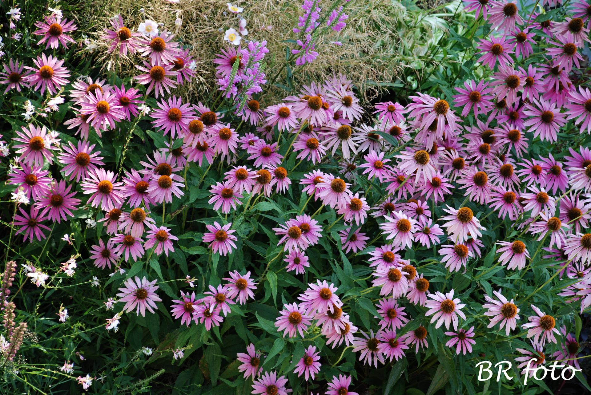 Zahrada v létě - Obrázek č. 105