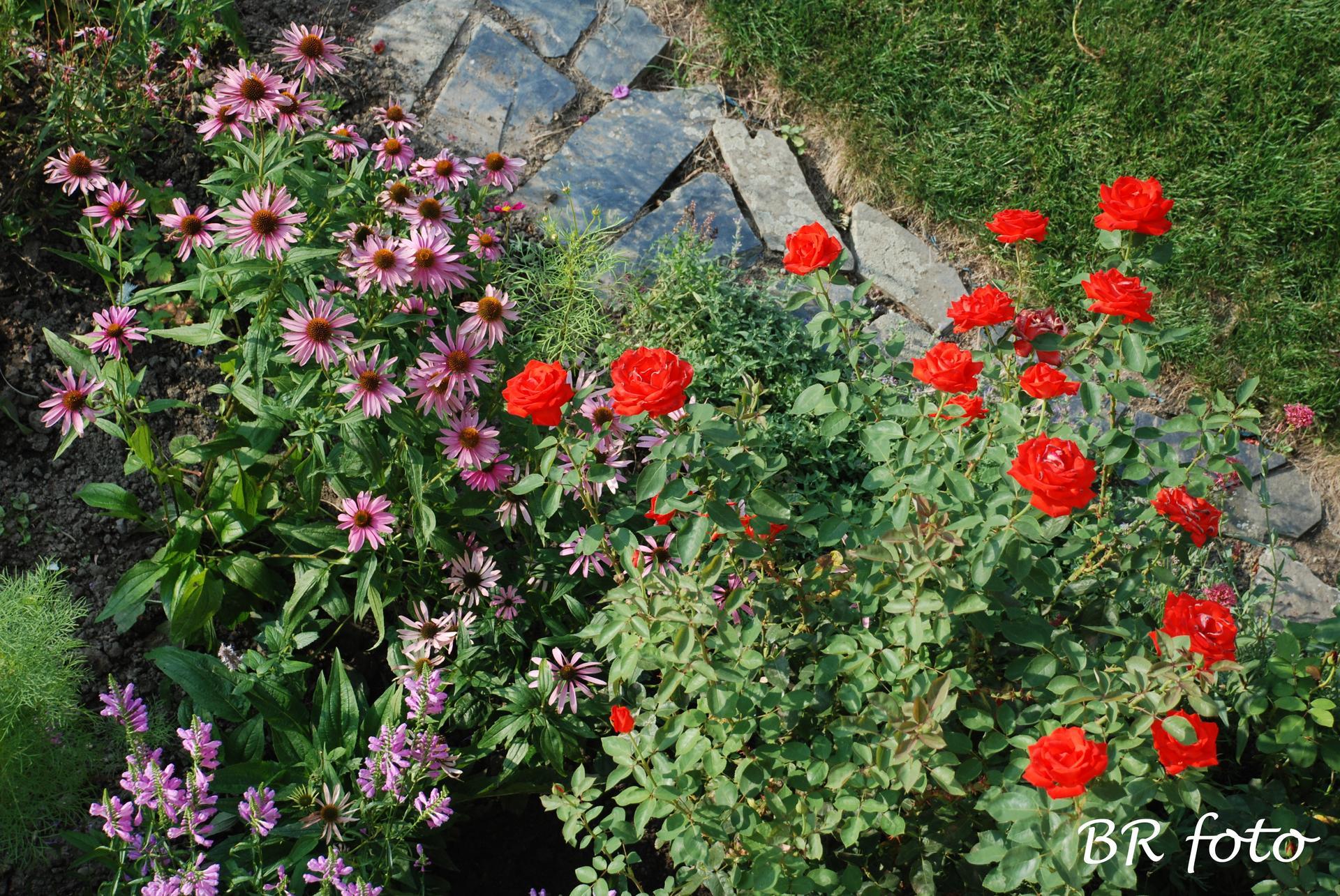 Zahrada v létě - Obrázek č. 104