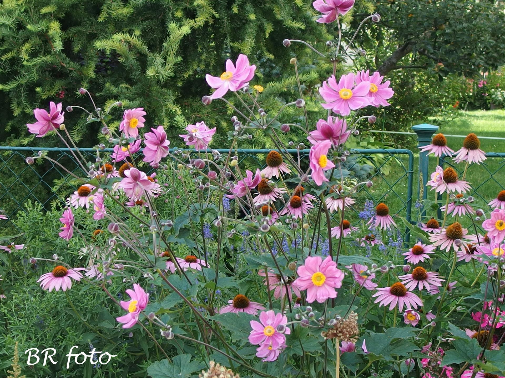 Zahrada v létě - Obrázek č. 116