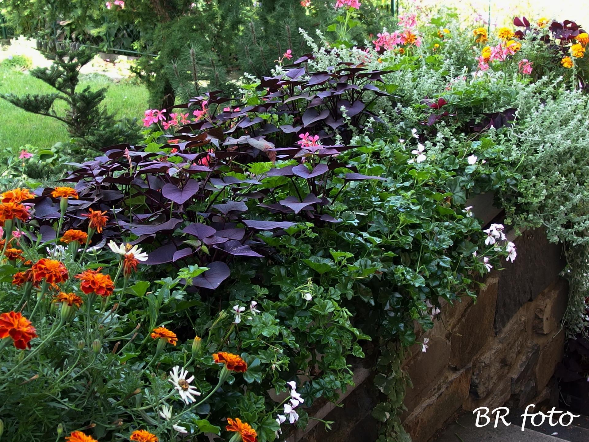 Zahrada v létě - truhlíky na zídce u vchodu
