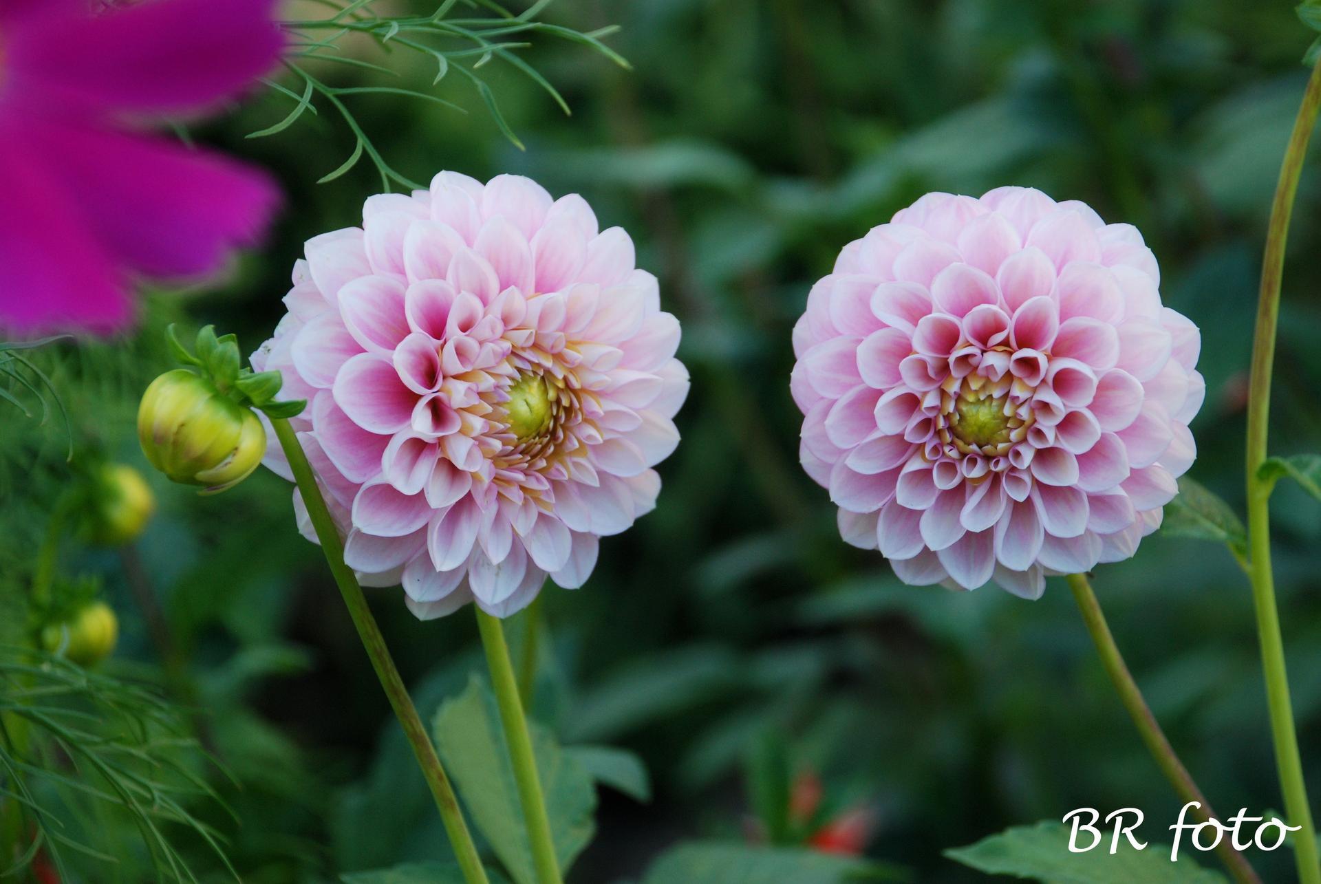 Zahrada v létě - Obrázek č. 138
