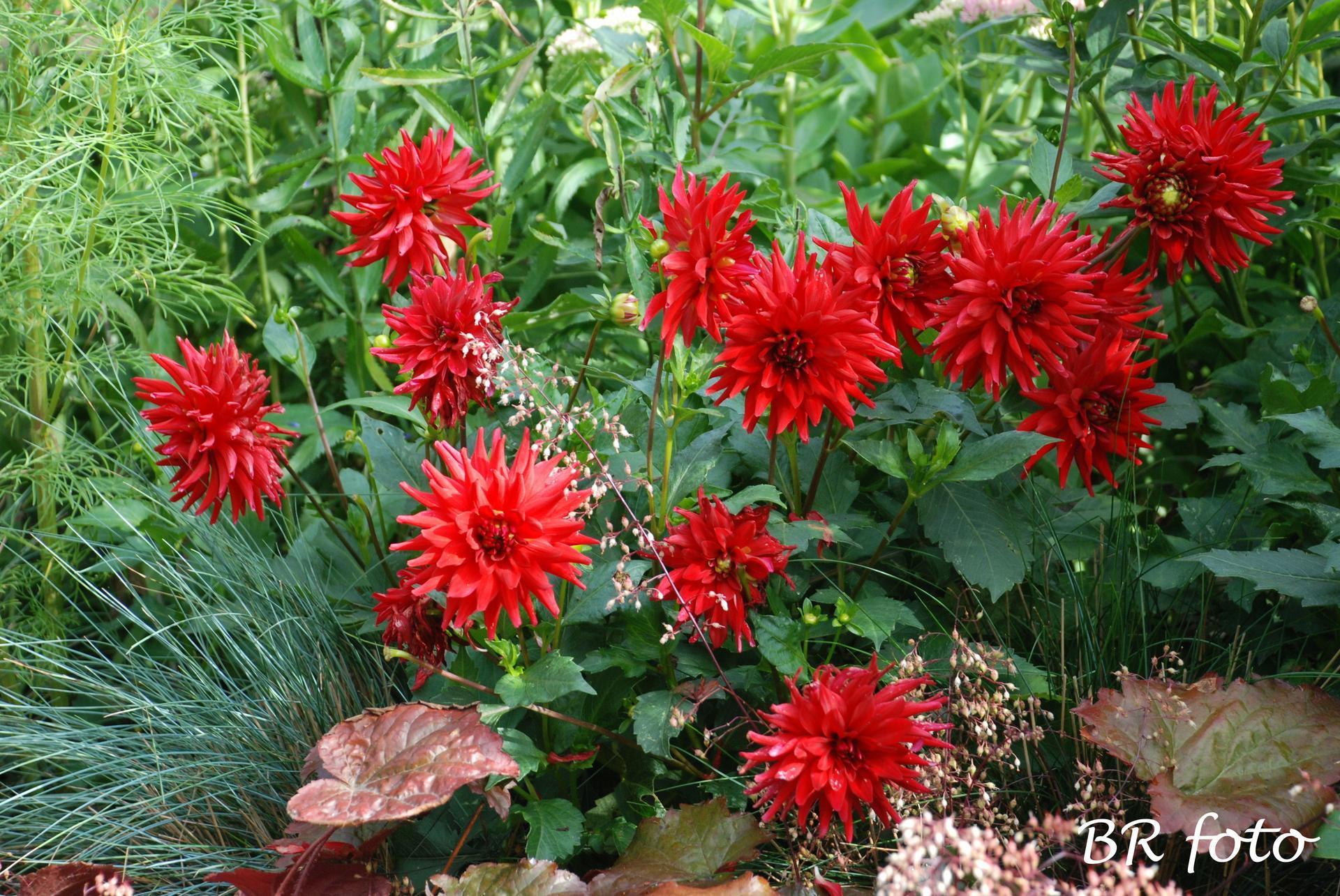 Zahrada v létě - Obrázek č. 140