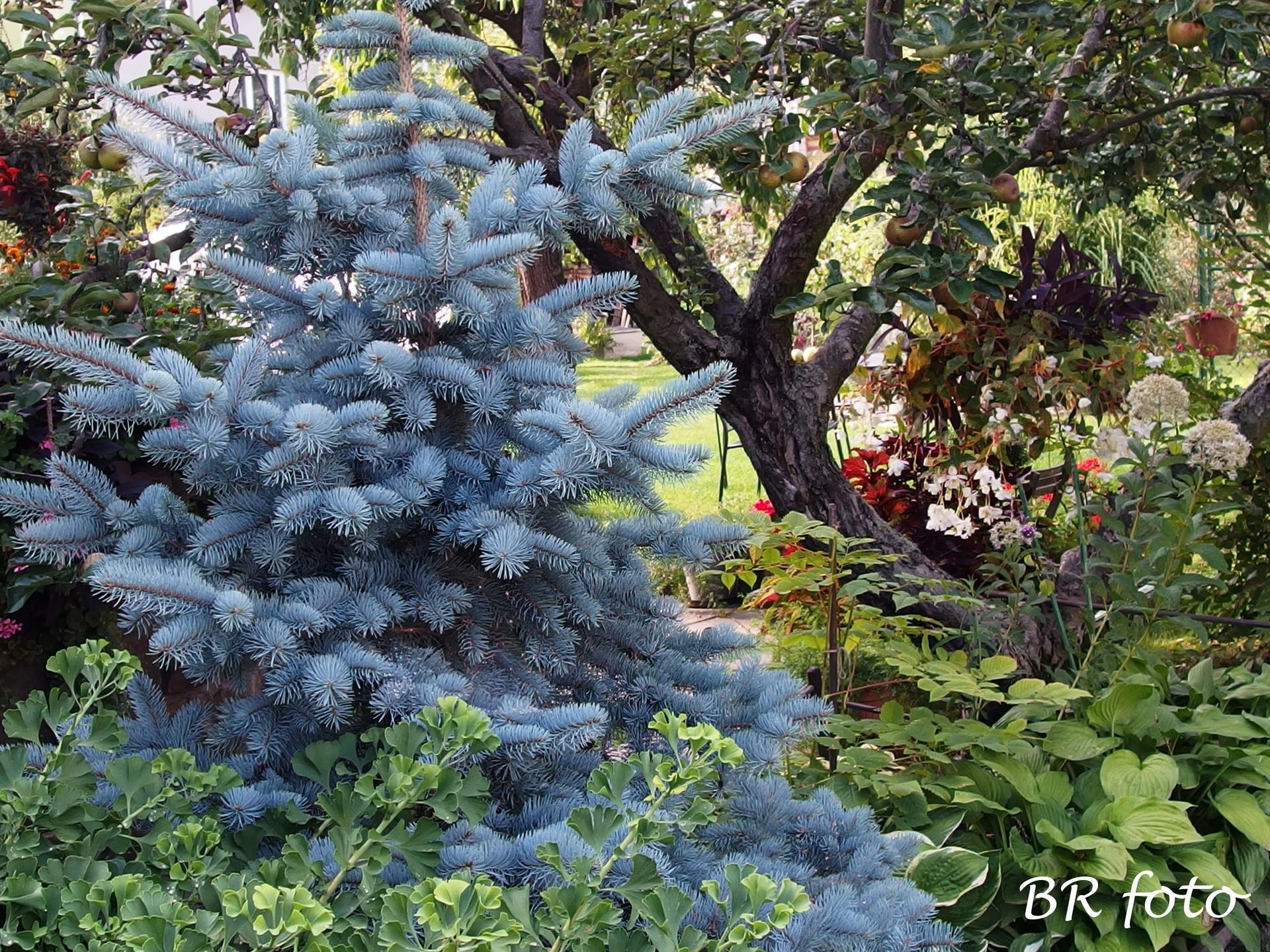 Zahrada v létě - Obrázek č. 136