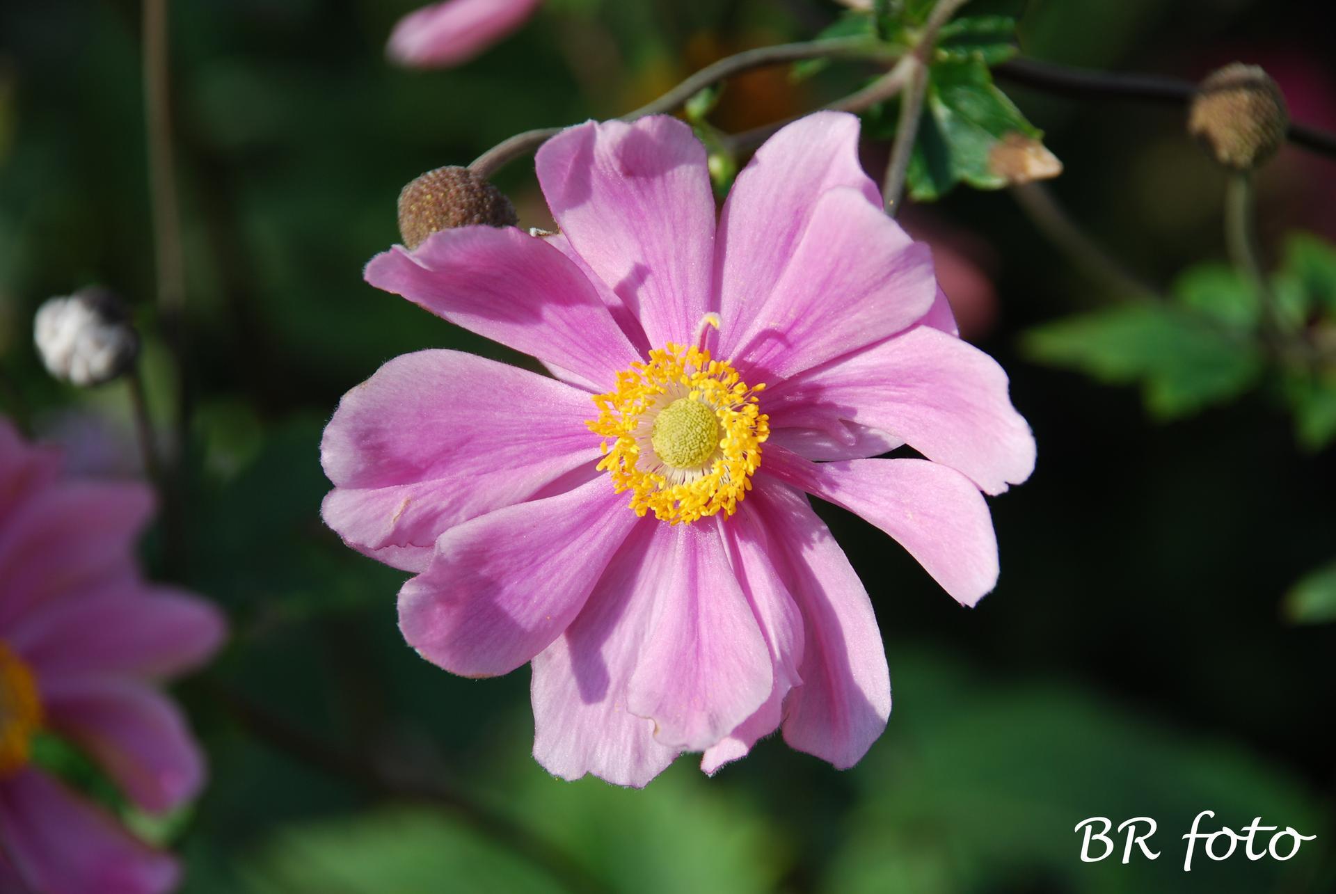 Zahrada v létě - Obrázek č. 144