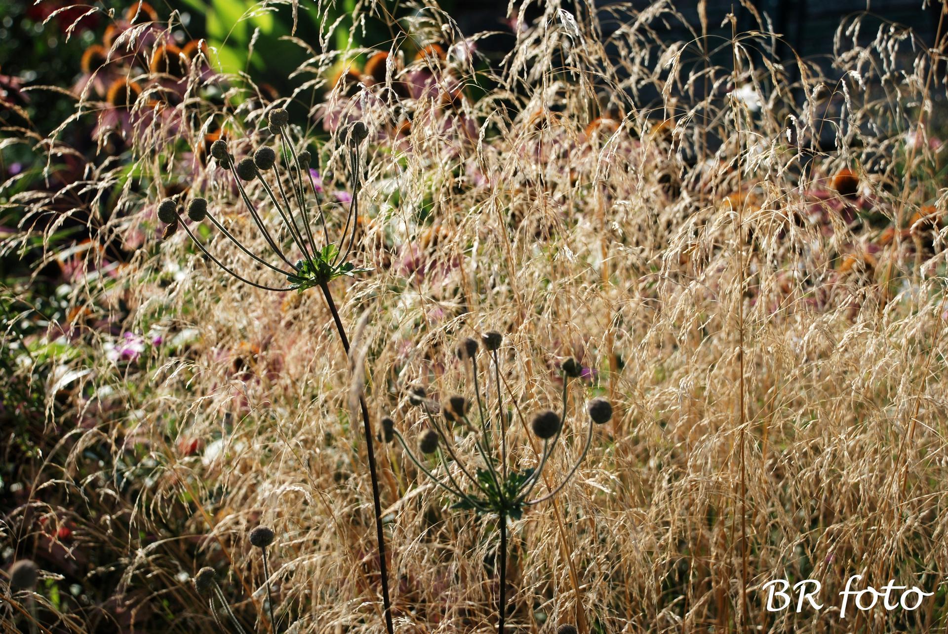 Zahrada v létě - Obrázek č. 142