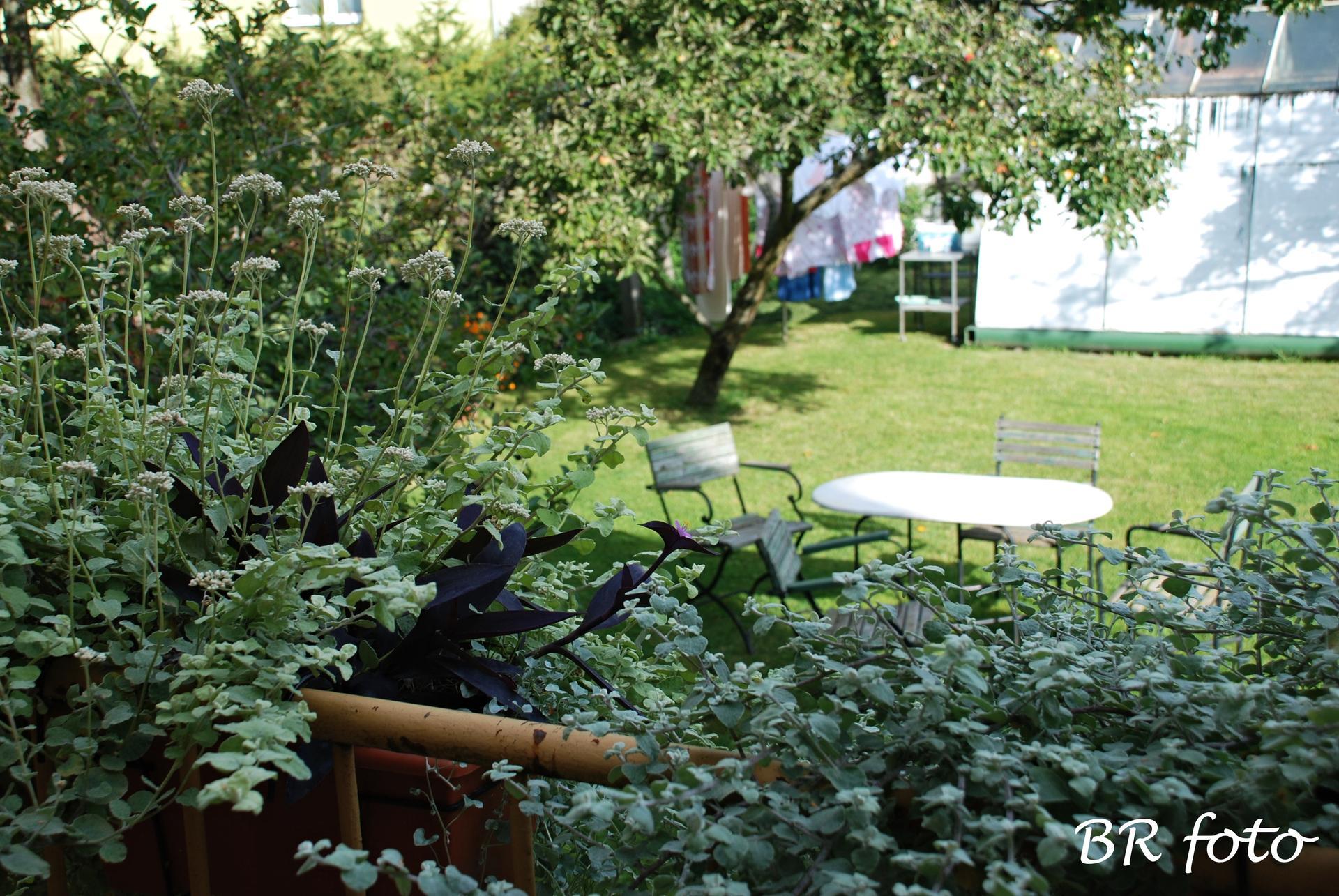 Zahrada v létě - pohled z kuchyňského balkonu na starý skleník.... a hrozně ráda suším prádlo venku