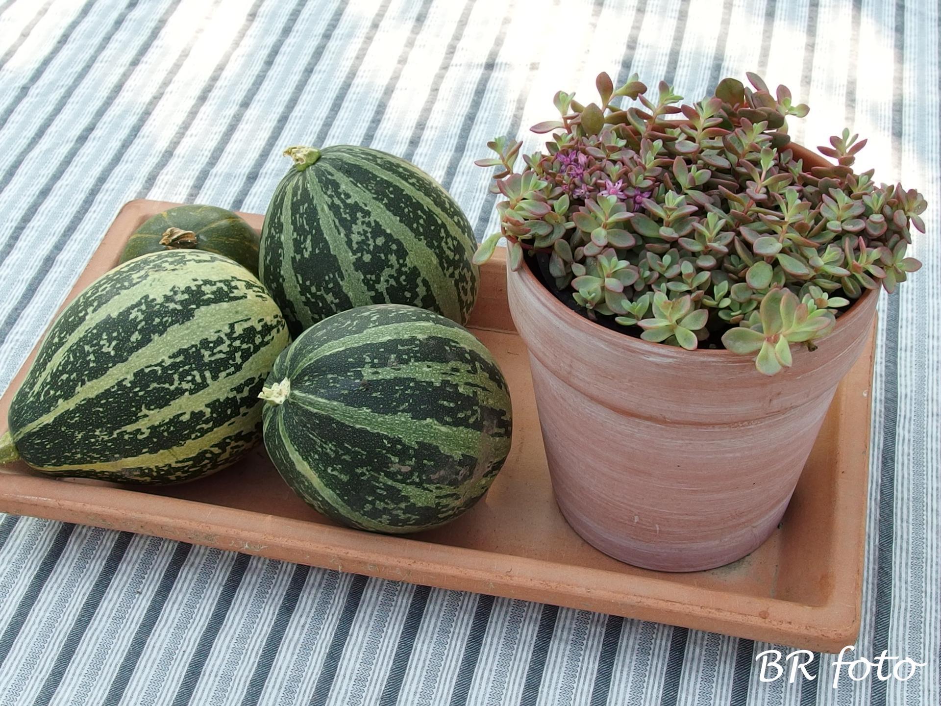 Zahrada v létě - letos jsem okrasné dýně nepěstovala, ale na kompostu vyrostly aspoň tyhle...