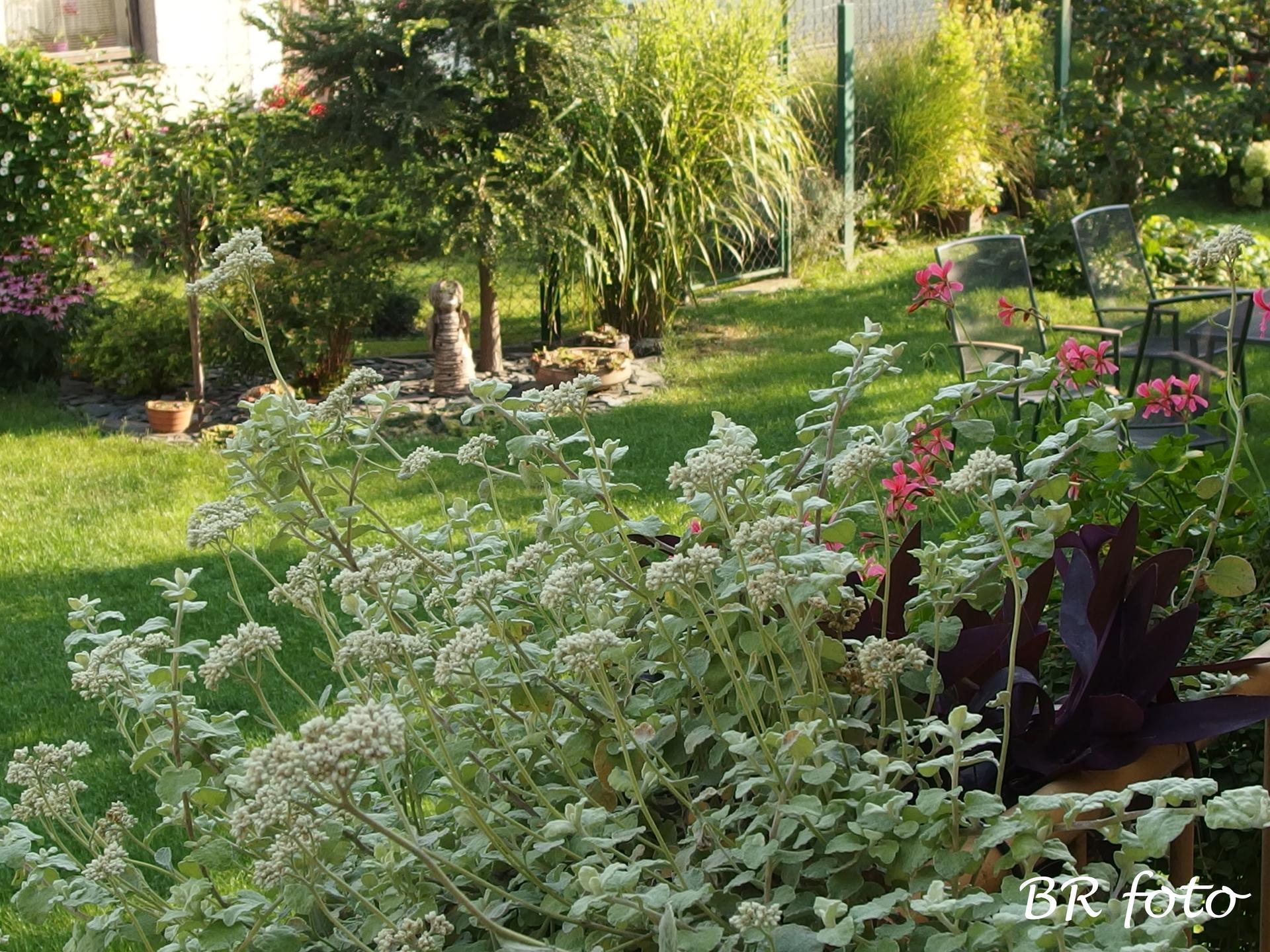 Zahrada v létě - pohled z kuchyňského balkonu....