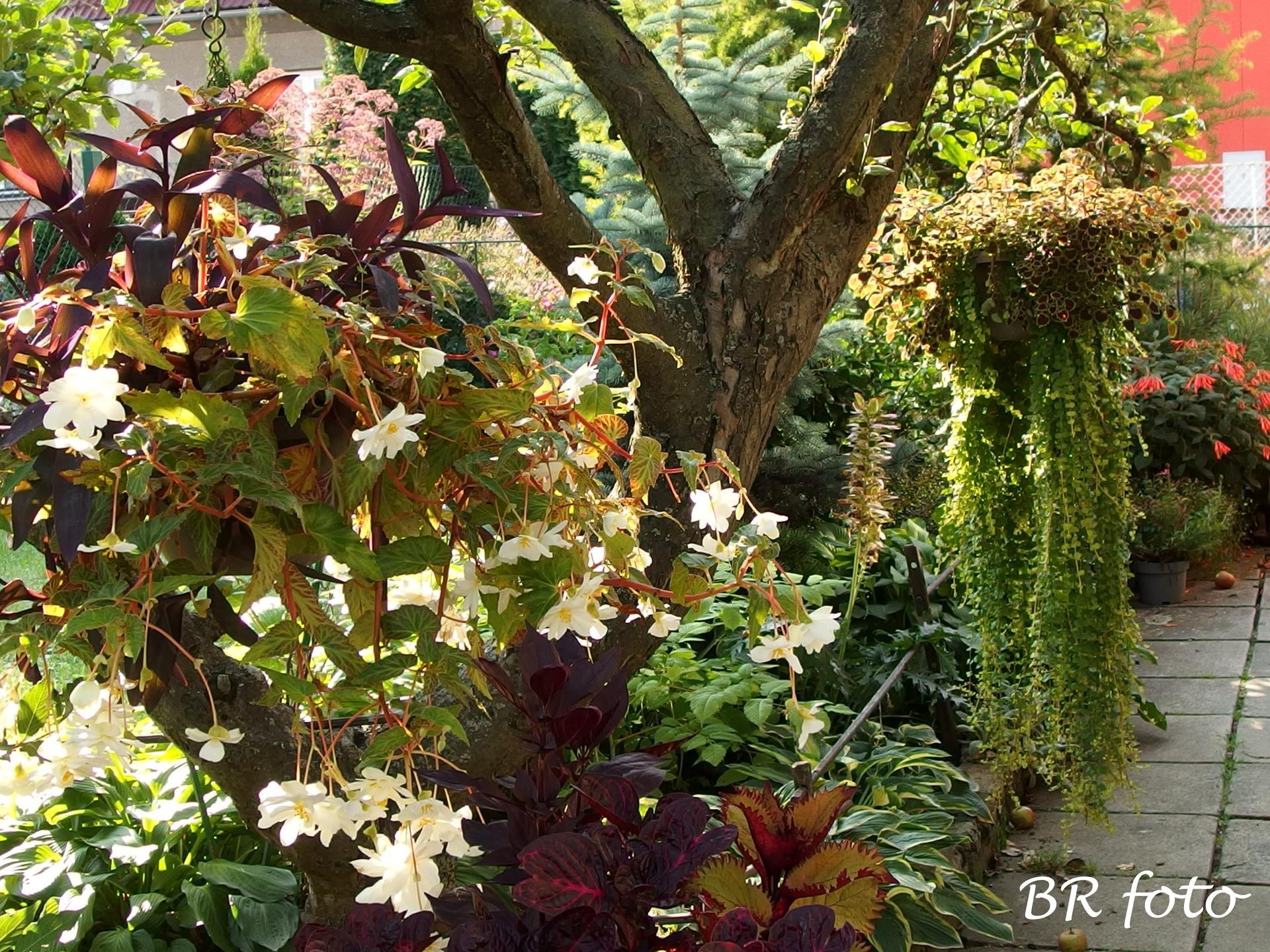 Zahrada v létě - a převislé rostliny už za zenitem, ale stále pěkné