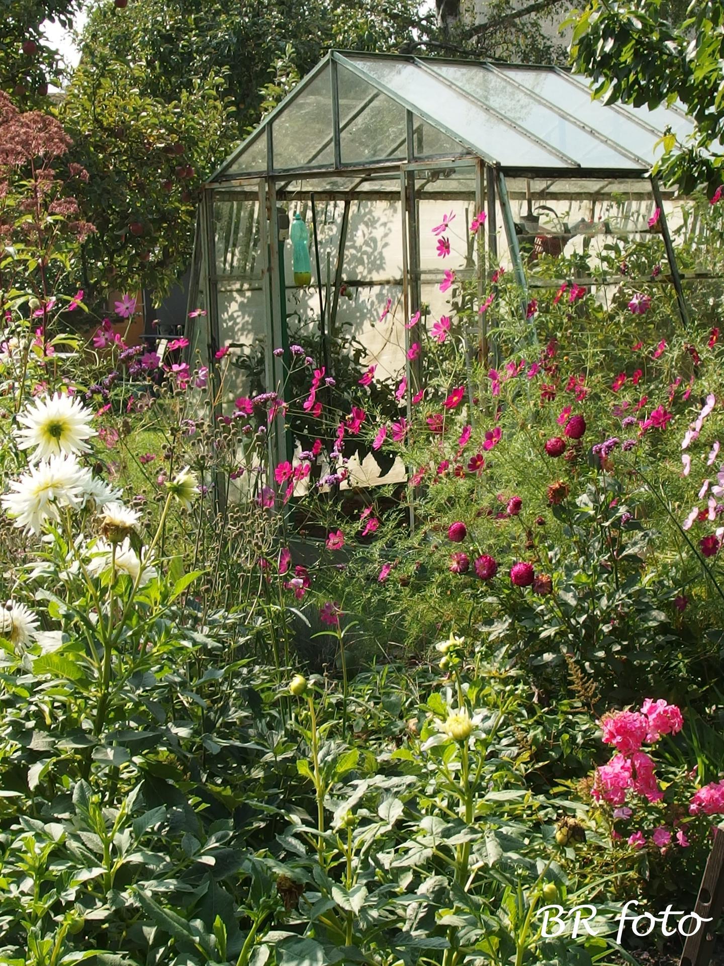 Zahrada v létě - Obrázek č. 156