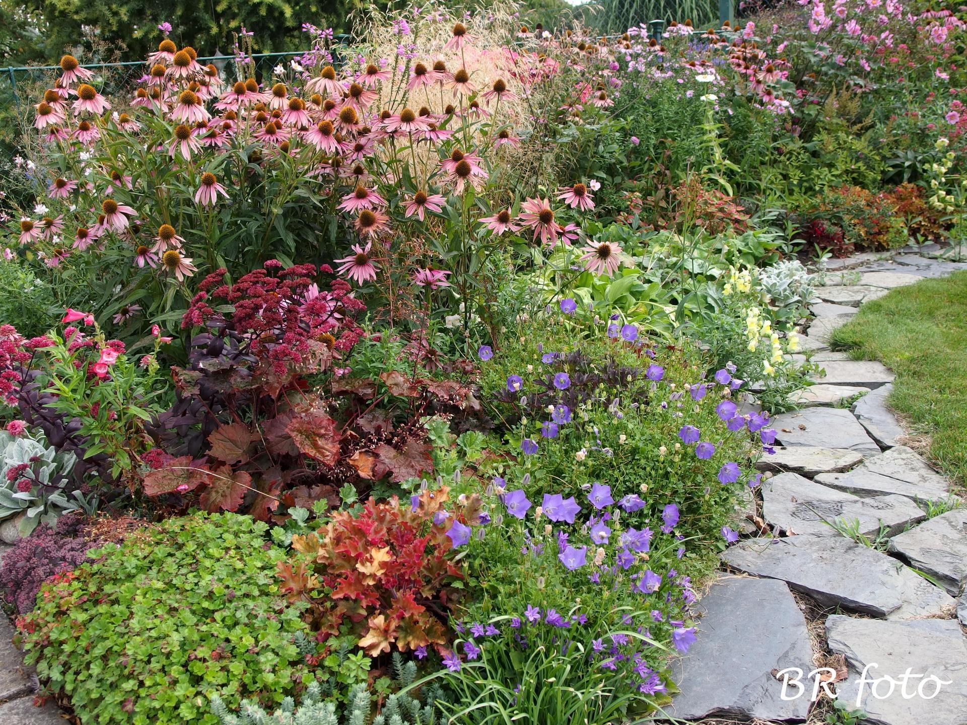 Zahrada v létě - předzahrádka