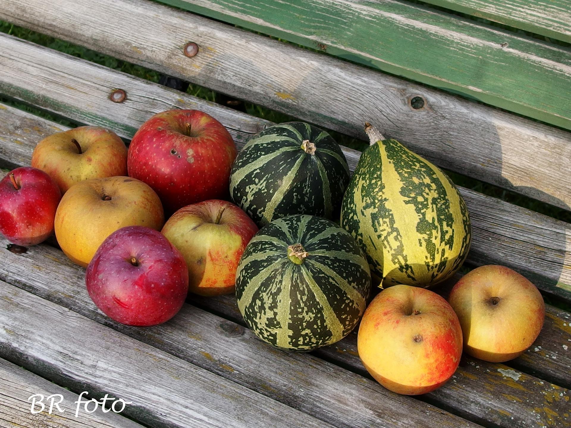 Vítej, podzime.... - pár jablek, aspoň na štrúdl...a pár okrasných dýní, které vyrostly samy na kompostu