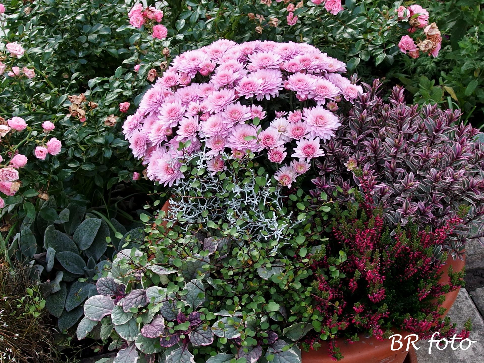 Vítej, podzime.... - krása a potěšení v odstínech růžové