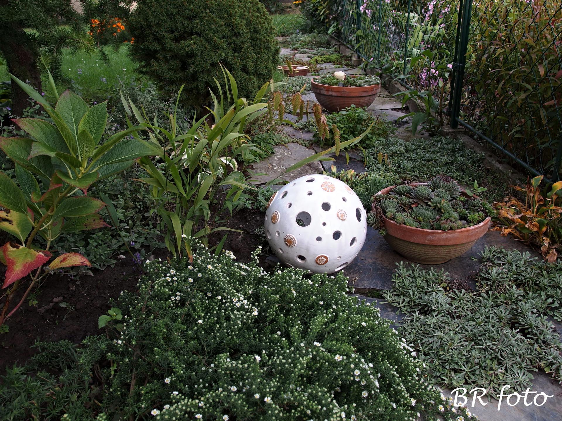 Vítej, podzime.... - dole - brzy pokvete drobnokvětá pokryvná astřička