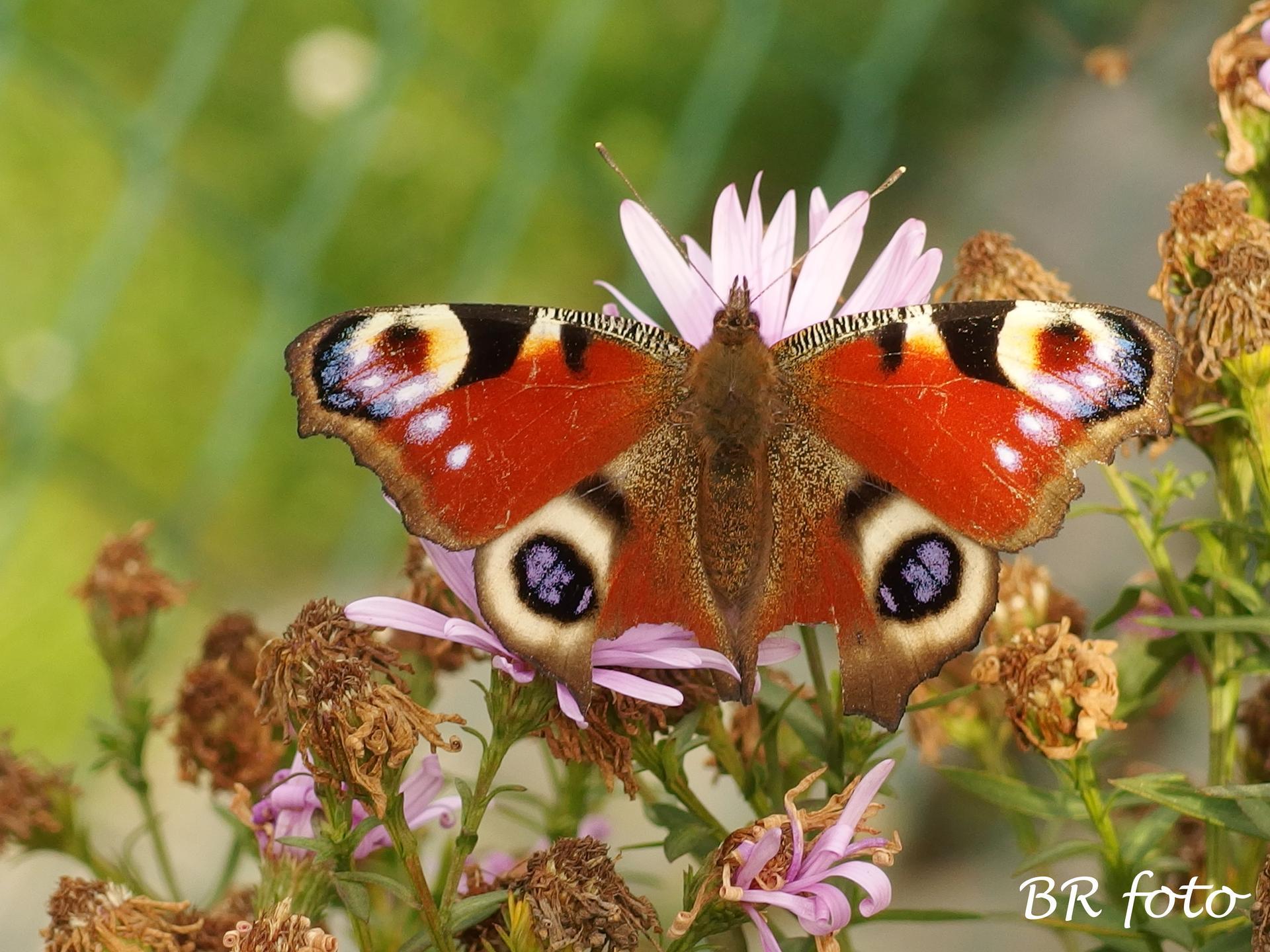 Vítej, podzime.... - dnes byl krásný slunečný den, i motýli létali