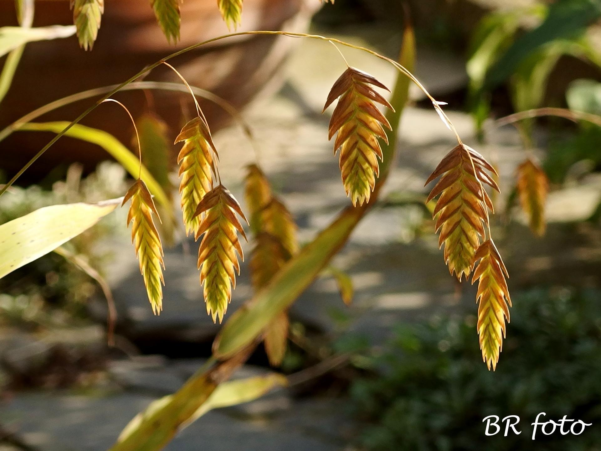 Vítej, podzime.... - uniola přechází na podzimní zbarvení