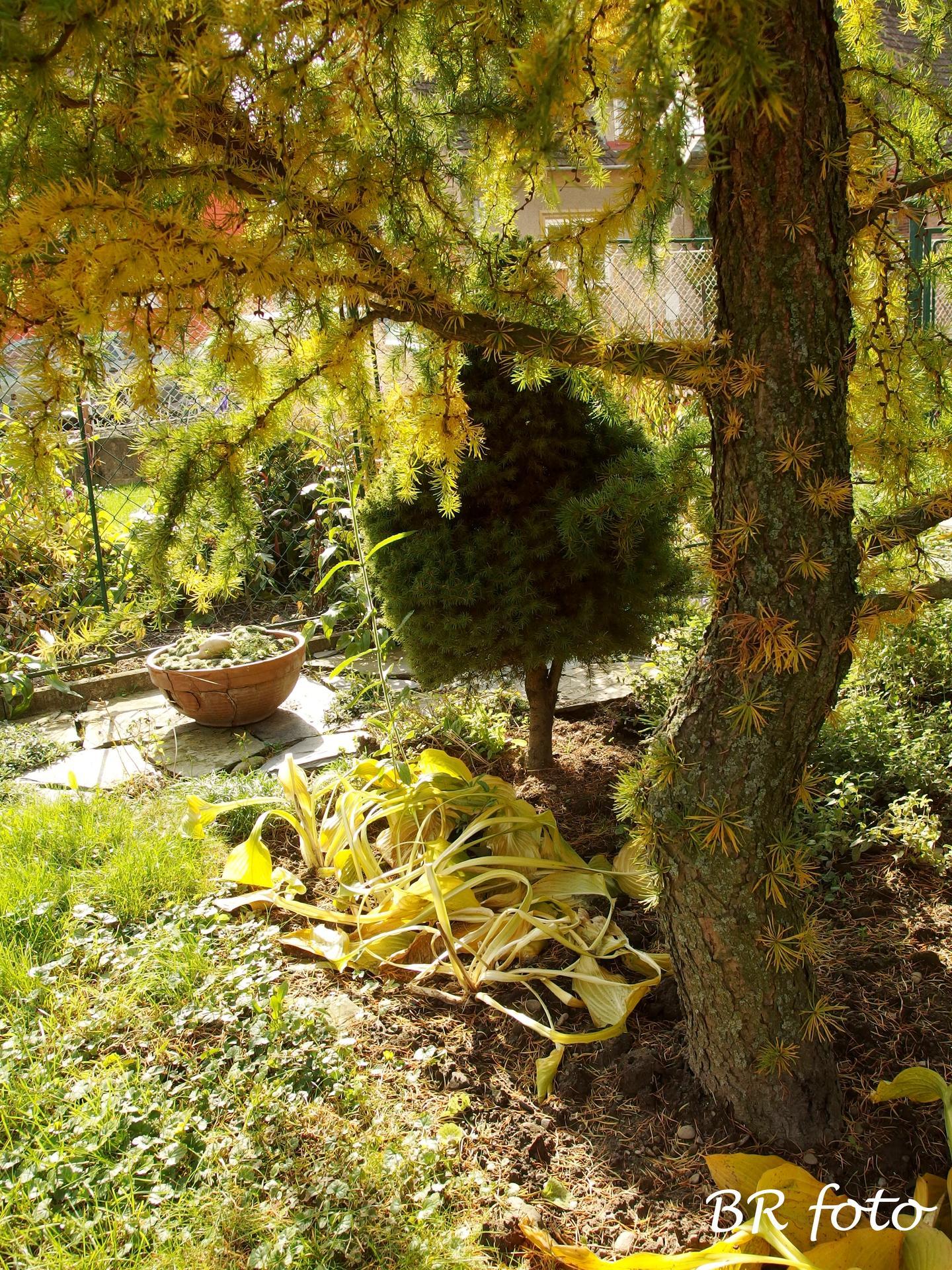 Vítej, podzime.... - Obrázek č. 62