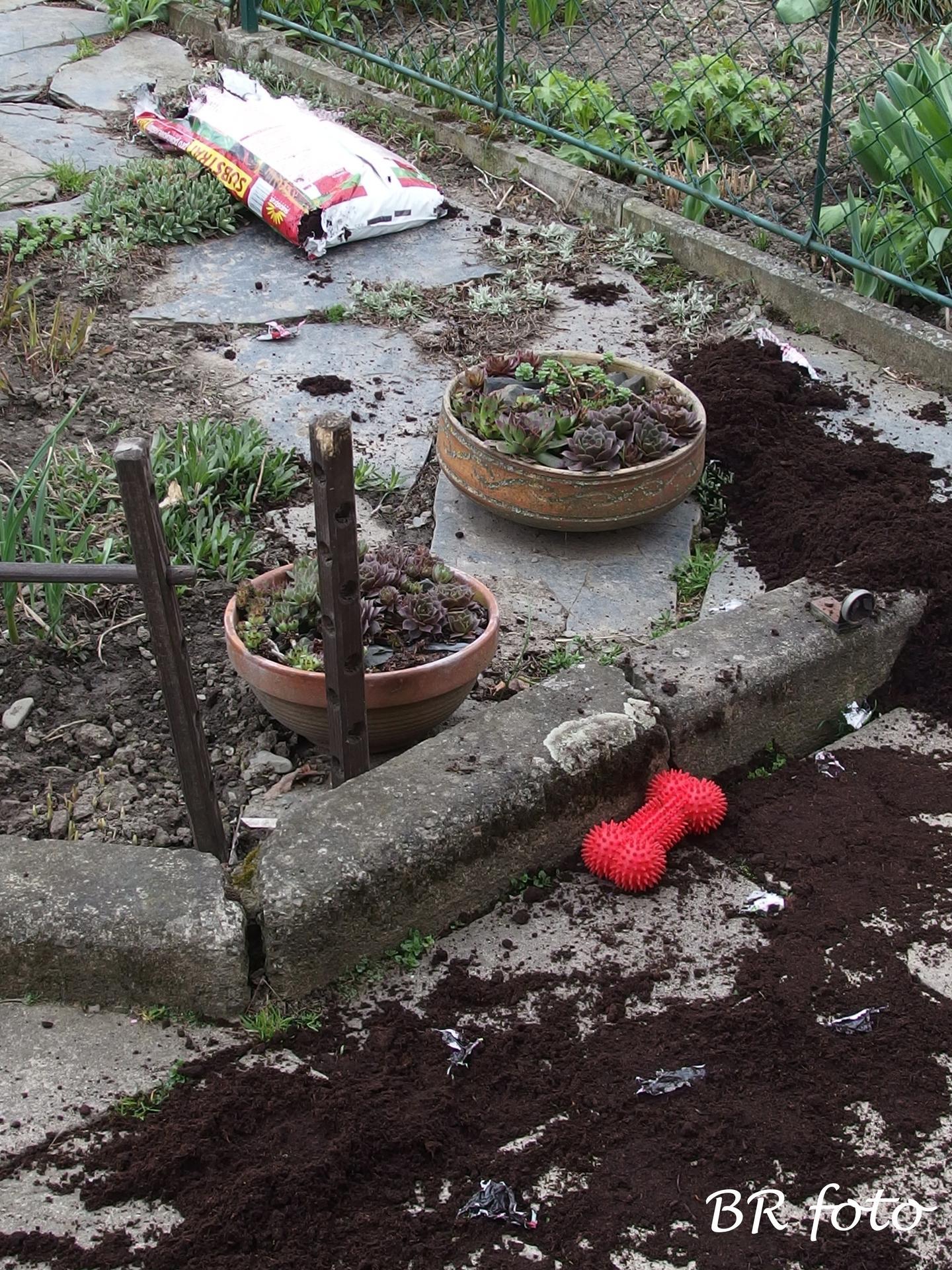 Pozvání do zahrady 2021 - ...měla jsem si tu zeminu hned uklidit...