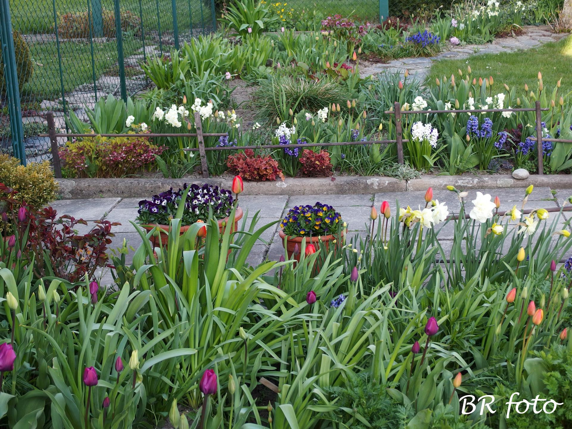Pozvání do zahrady 2021 - momentálně kralují cibuloviny - hyacinty, narcisy, tulipány