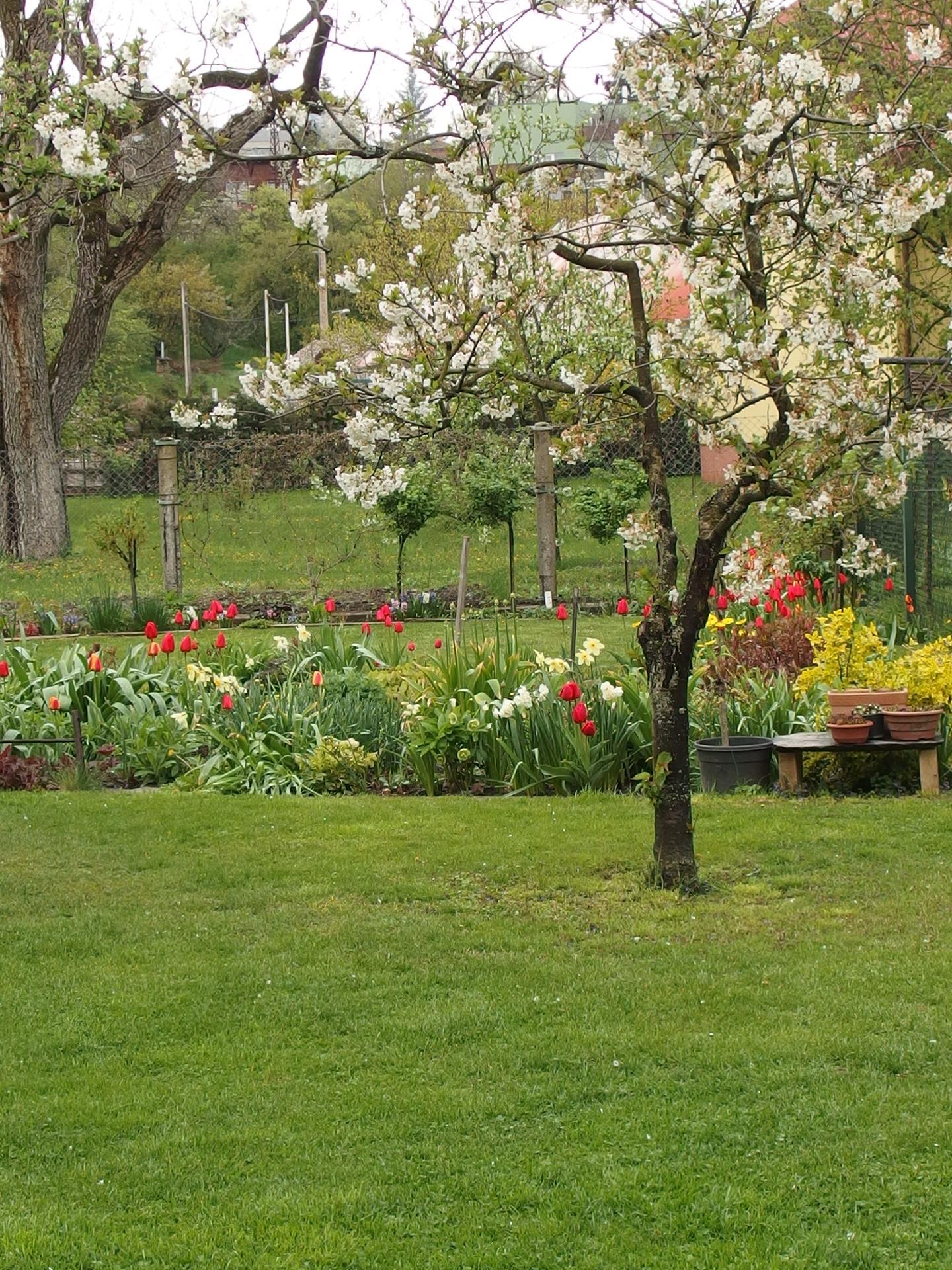 Pozvání do zahrady 2021 - trávník a záhony za domem