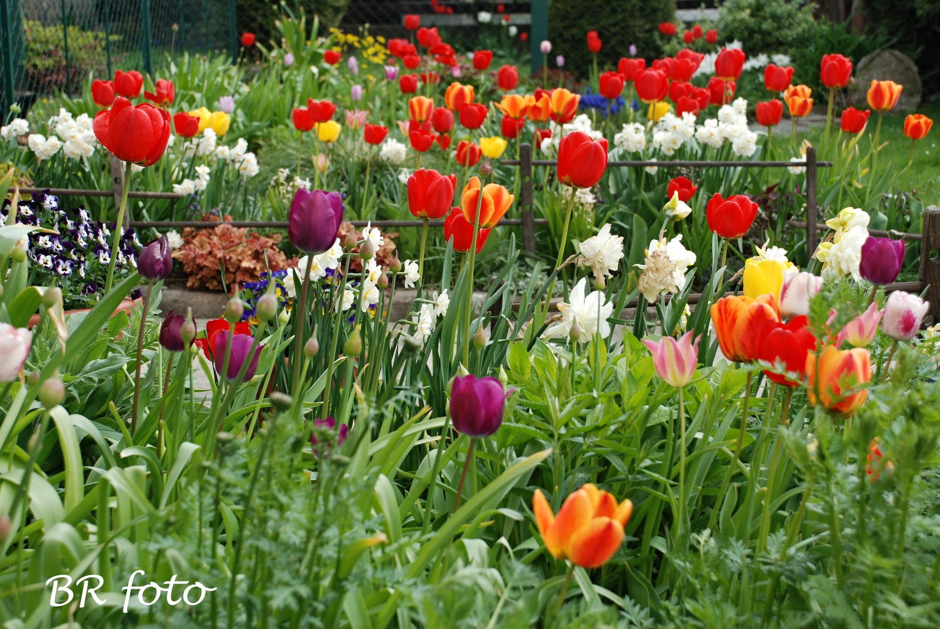 Pozvání do zahrady 2021 - letos se cibulovinám daří a díky chladnému jaru déle kvetou