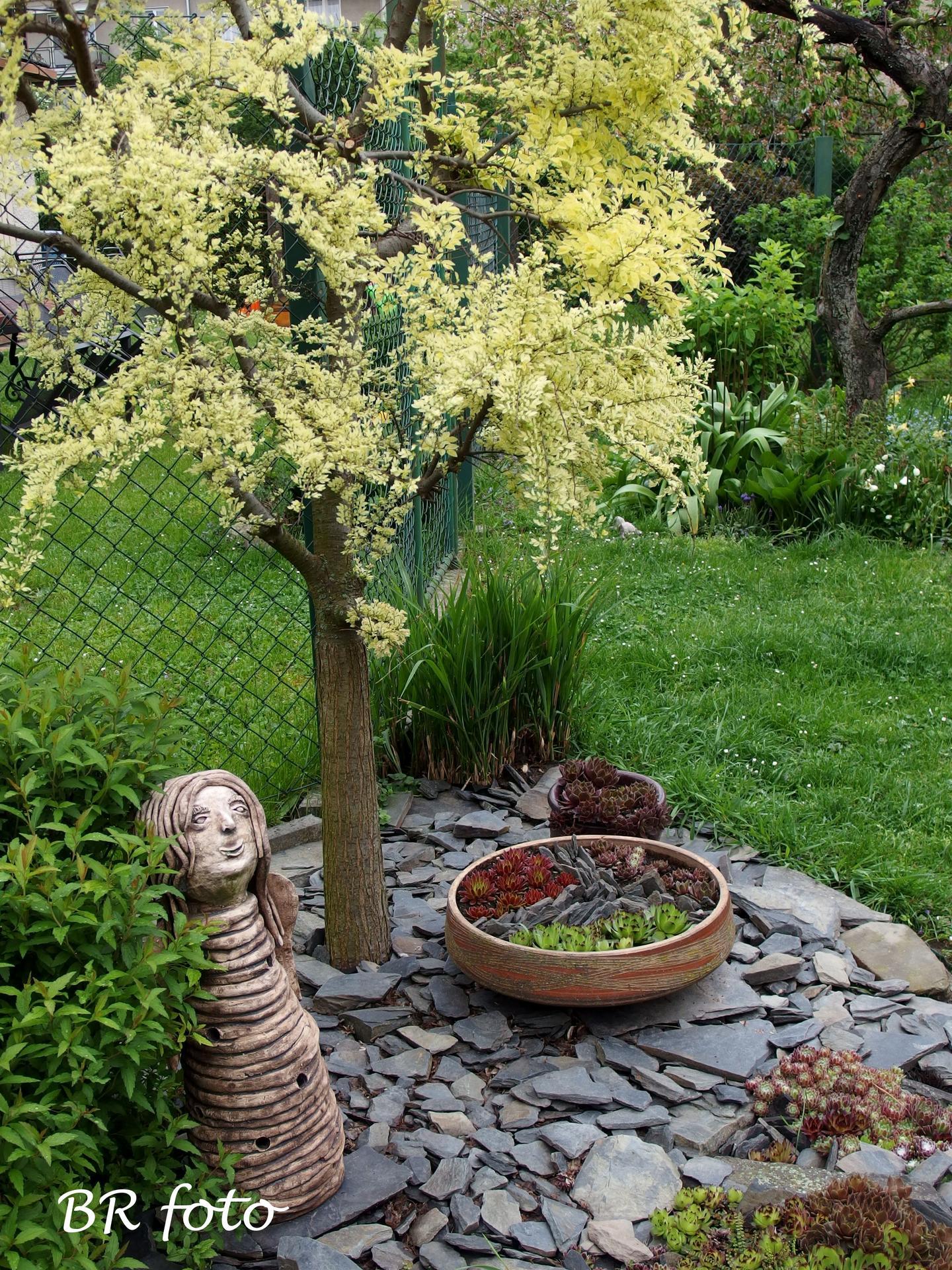 Pozvání do zahrady 2021 - jilm Giesha - listy později zezelenají