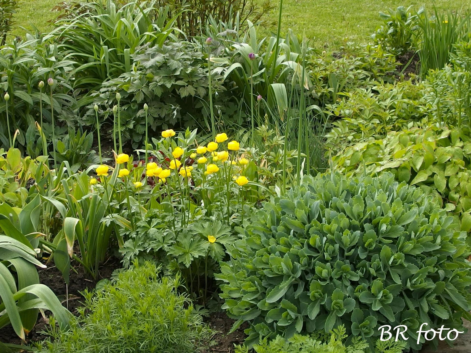 Pozvání do zahrady 2021 - smíšený trvalkový záhon