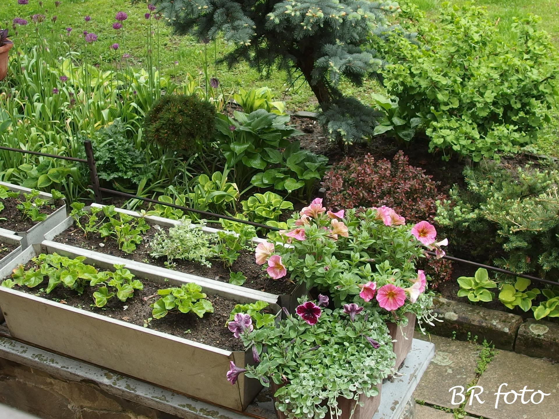 Pozvání do zahrady 2021 - Obrázek č. 100