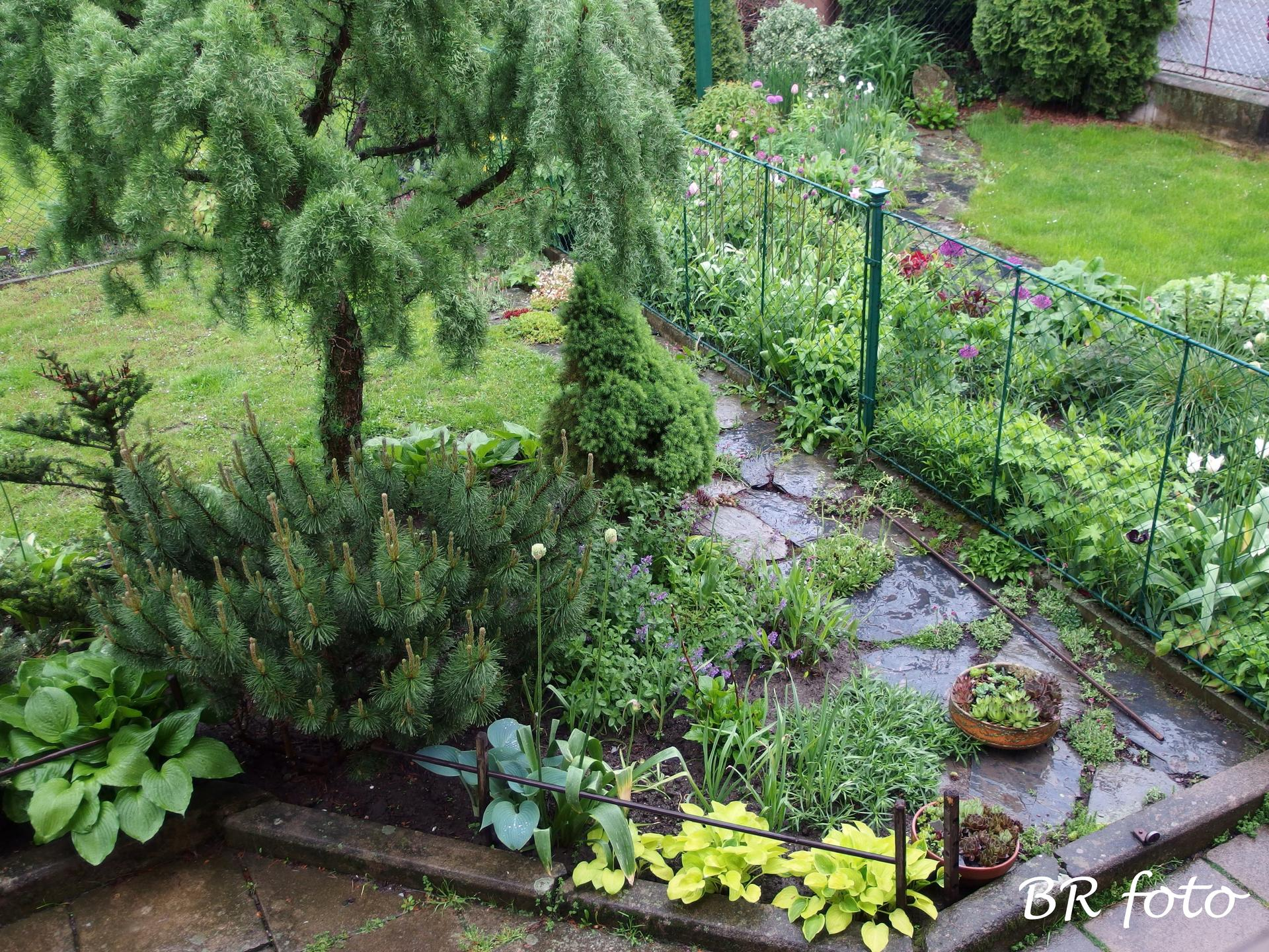 Pozvání do zahrady 2021 - za deště se nejlíp myjí okna, a tak jsem si z oken udělala i pár fotek upršené zahrady