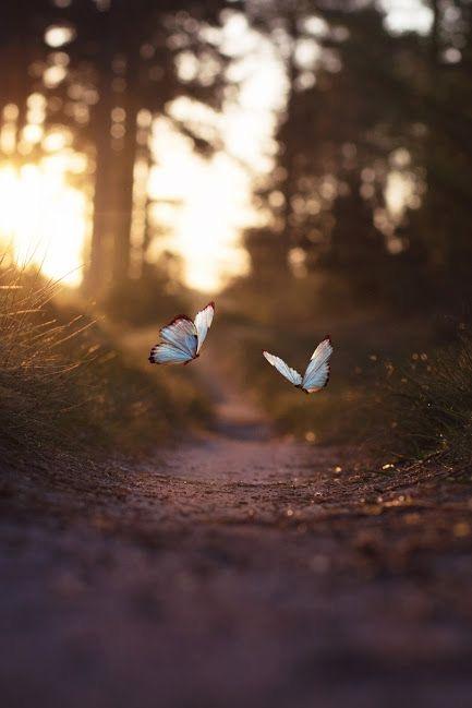 Moje sny ... - Motyliky budú všade 🦋 lebo ich milujem 🦋