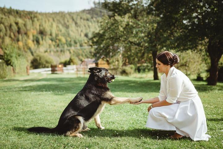 Máte aj vy svadobnú fotku s domácim miláčikom či s nejakým zvieratkom? A chcete mi súčasťou tohto článku? Pošlite mi fotku do správy spolu s menom fotografa :) https://mojasvadba.zoznam.sk/svadobne-fotky-so-zvieratkami/ - Obrázok č. 1
