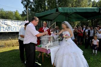 Svatební holoubci