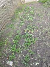 Po odstranění plevele mamka našla krásné jahody