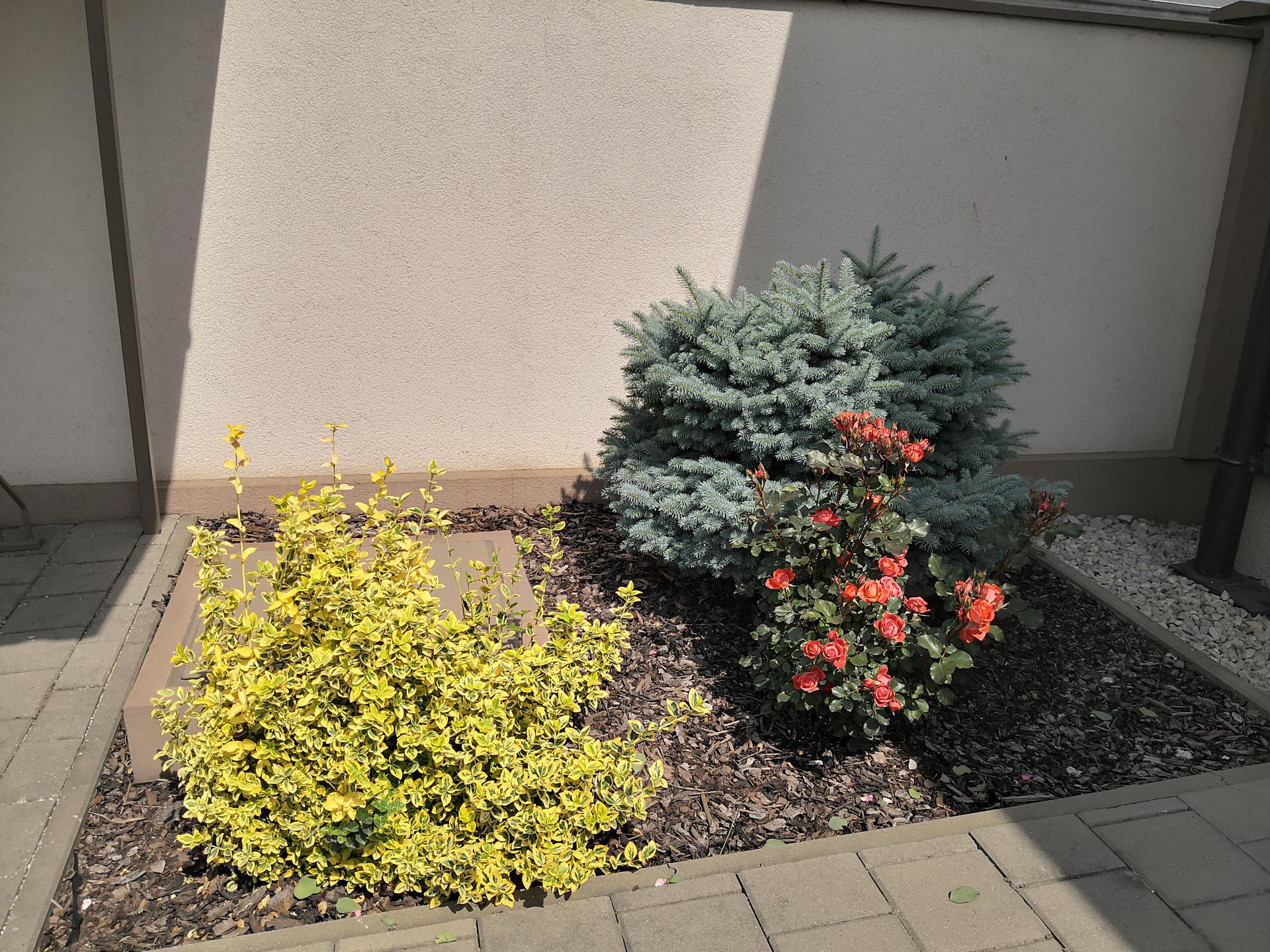 Naša okrasná záhrada už rozrastaná 2020 - Obrázok č. 7